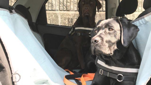 ペット用ドライブシート 大型犬
