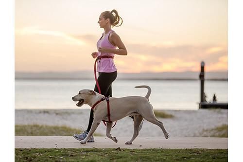 EZYDOG ロードランナー 走るラブラドールレトリバーと女性