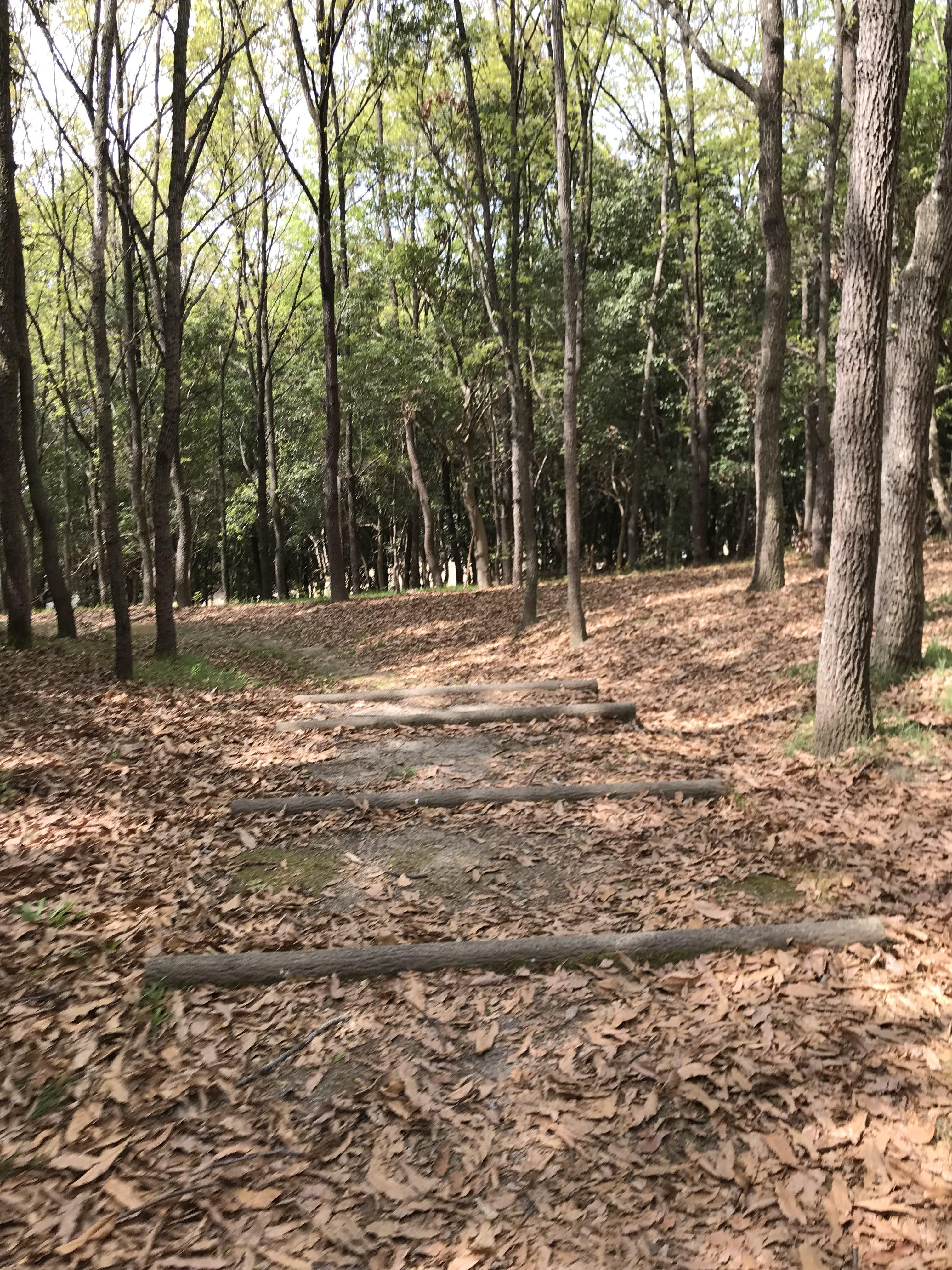 森の中の階段
