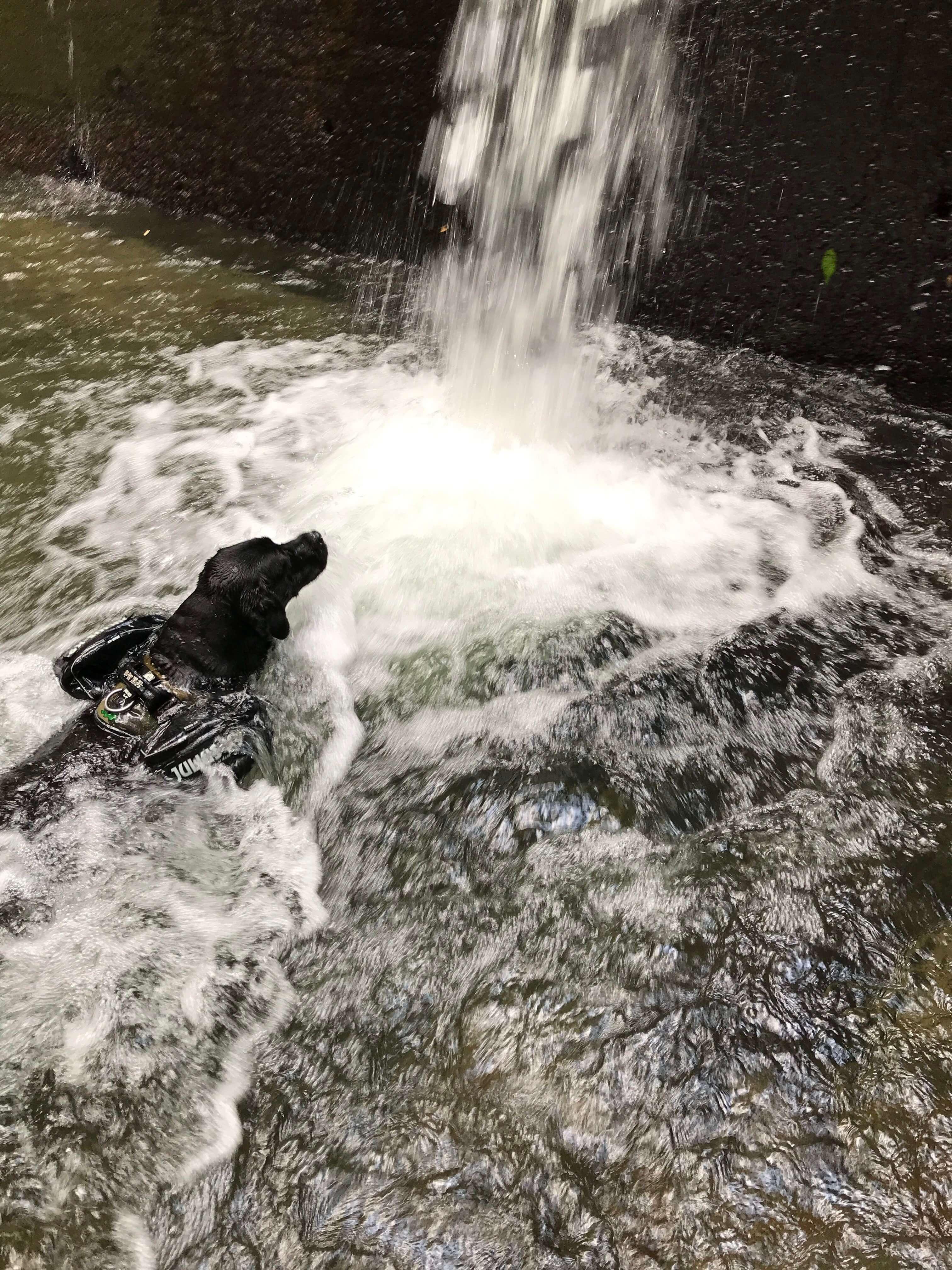滝 黒ラブ