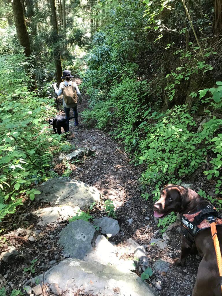 犬鳴山を下山する黒ラブと飼主とカメラ目線なチョコラブ