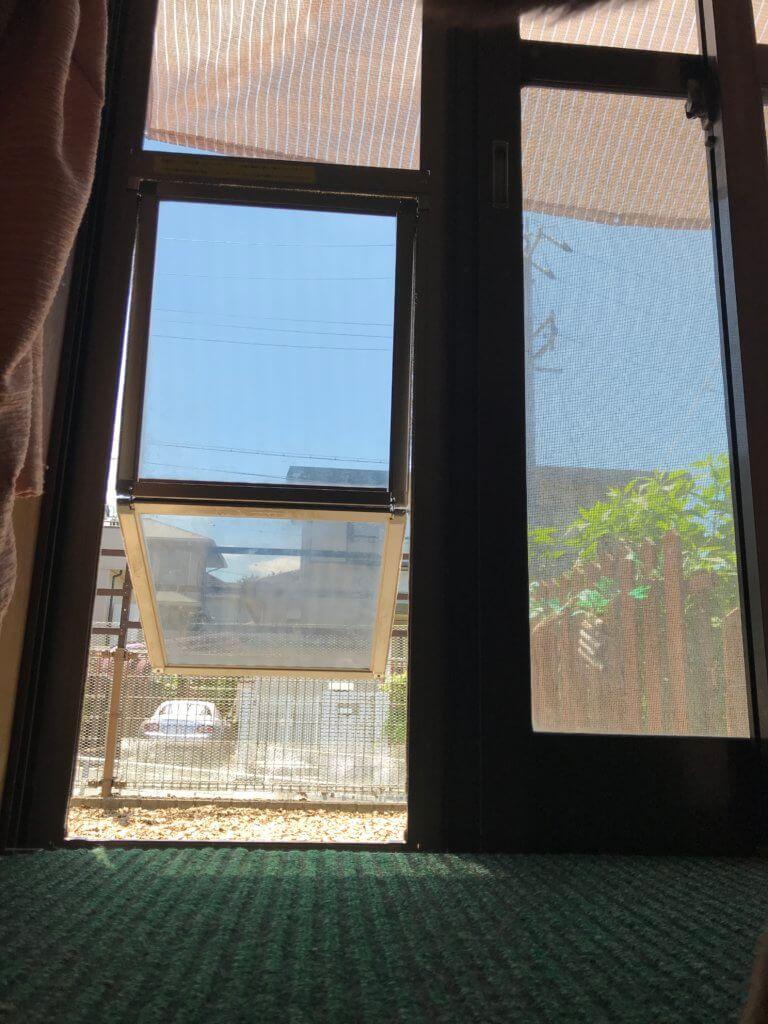 犬のドアから見える庭