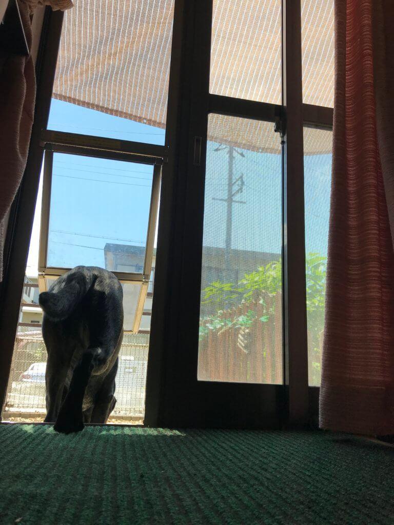 犬のドアから庭に出るラブラドール