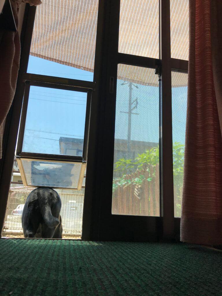 犬のドアから庭に出る途中のラブラドールレトリバーのお尻