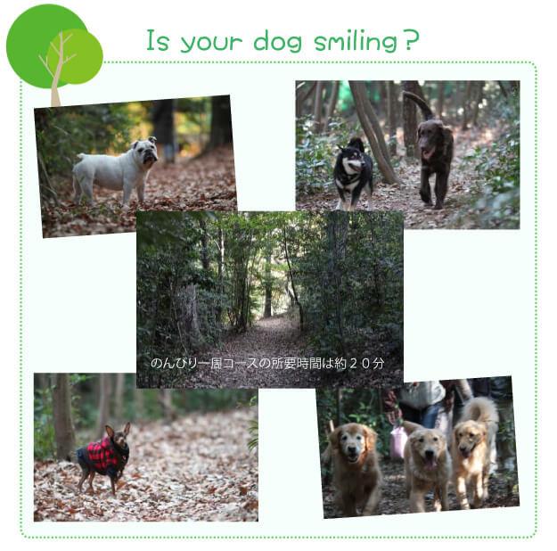 犬の森ポム森の散歩道