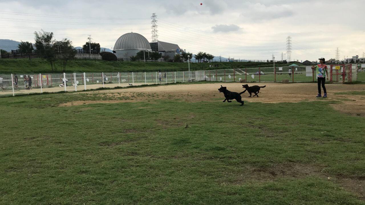 花園中央公園ドッグランでボール遊び