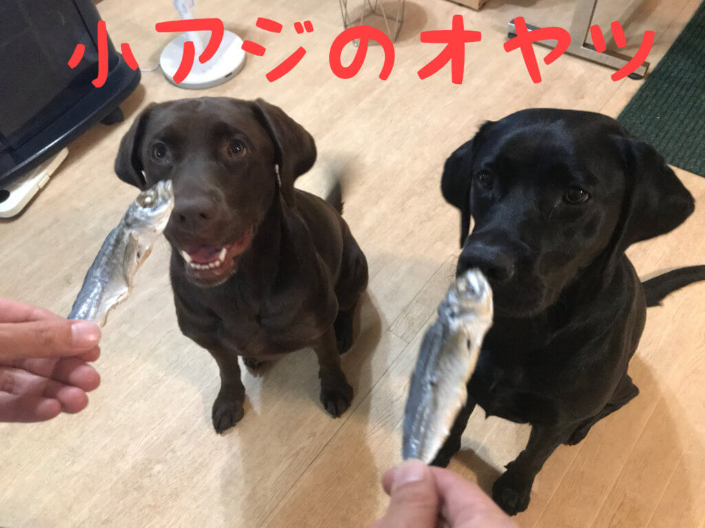 犬のおやつ 小アジ