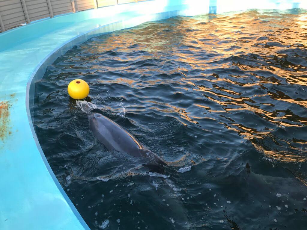 ワールド牧場 ボールで遊ぶイルカ