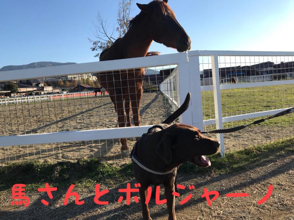 ワールド牧場 馬さんとボルジャーノ チョコラブ