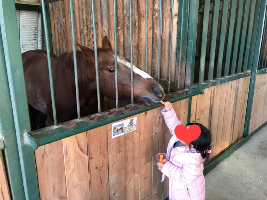 ワールド牧場 馬に餌やり体験