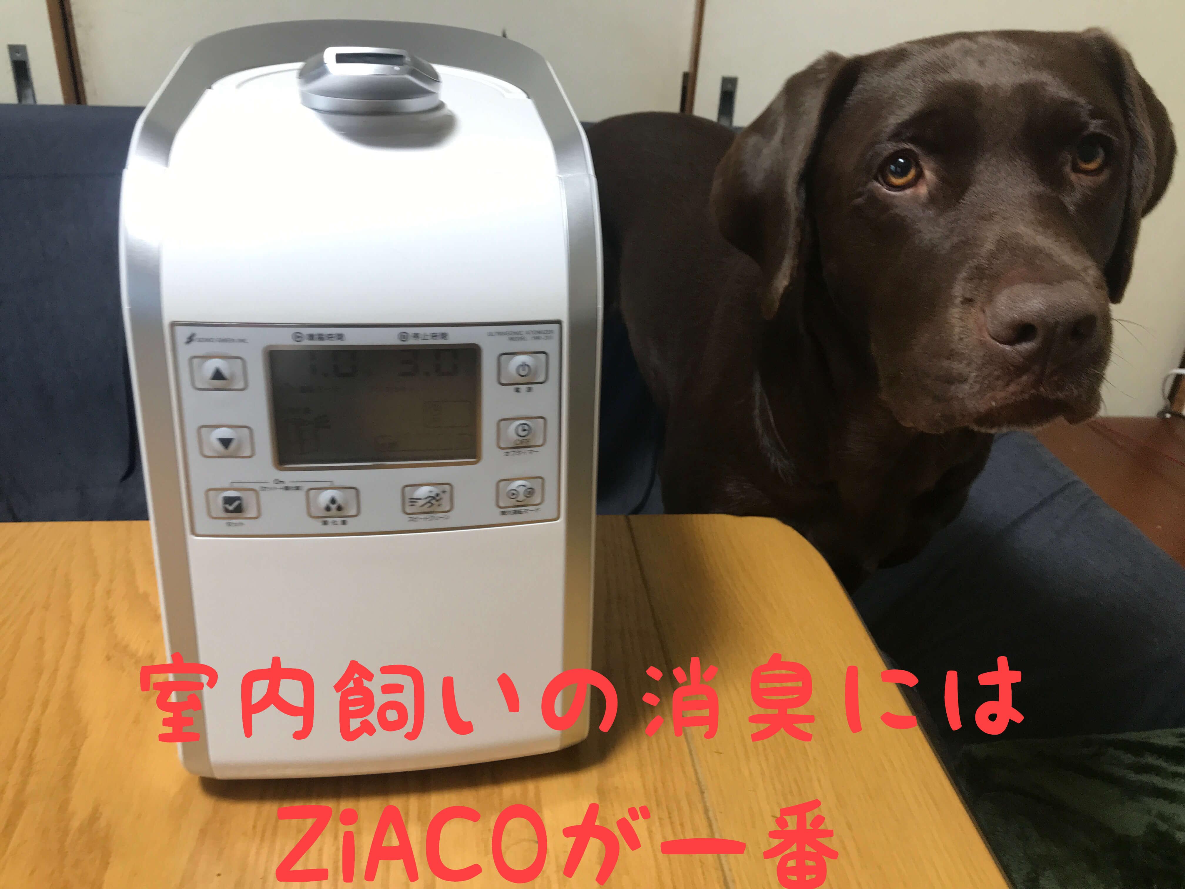 ジアコ チョコラブ 室内飼いの消臭にはZiACOが一番