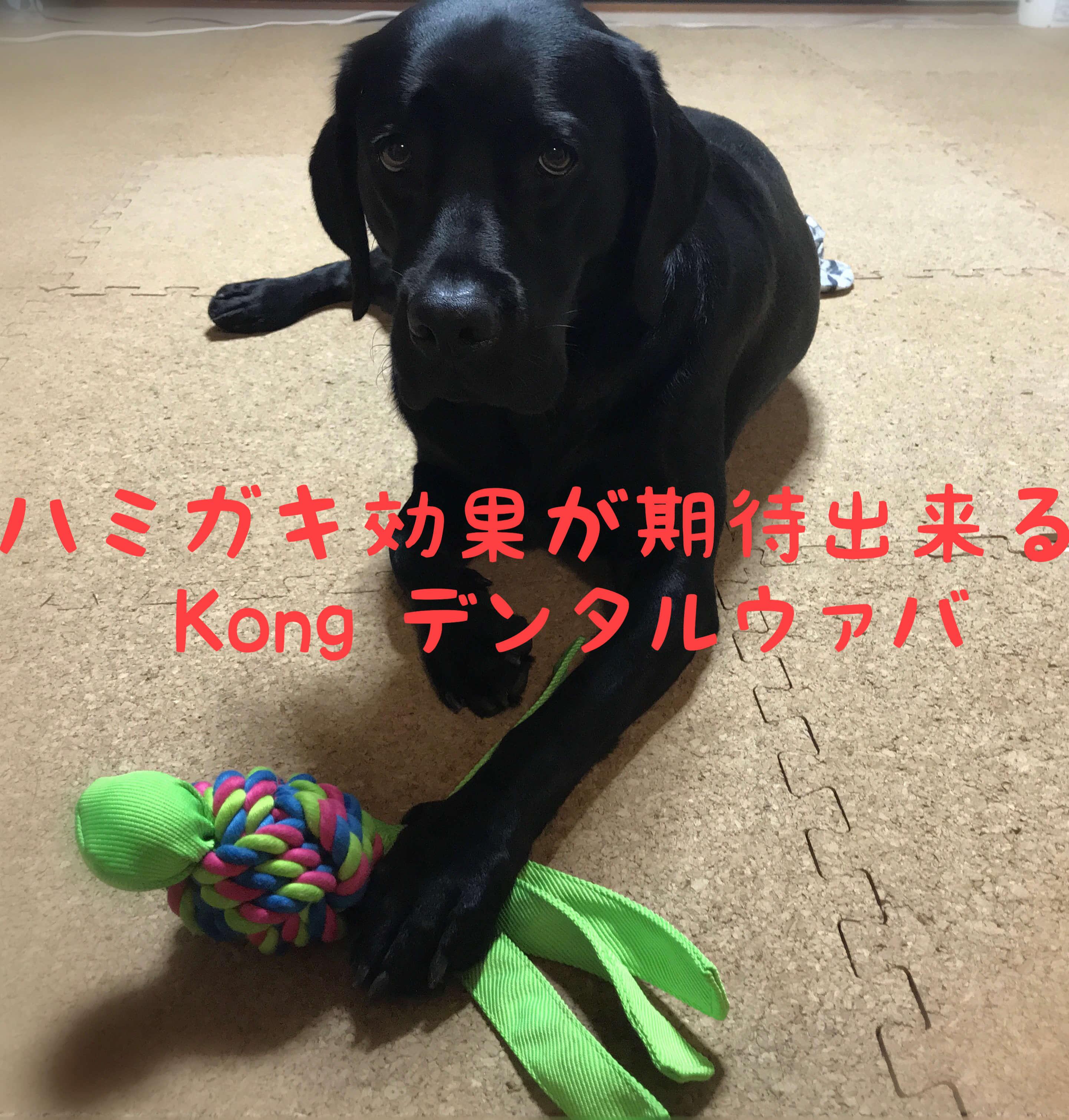 ハミガキ効果が期待できる Kong デンタルウァバ 黒のラブラドールレトリバー