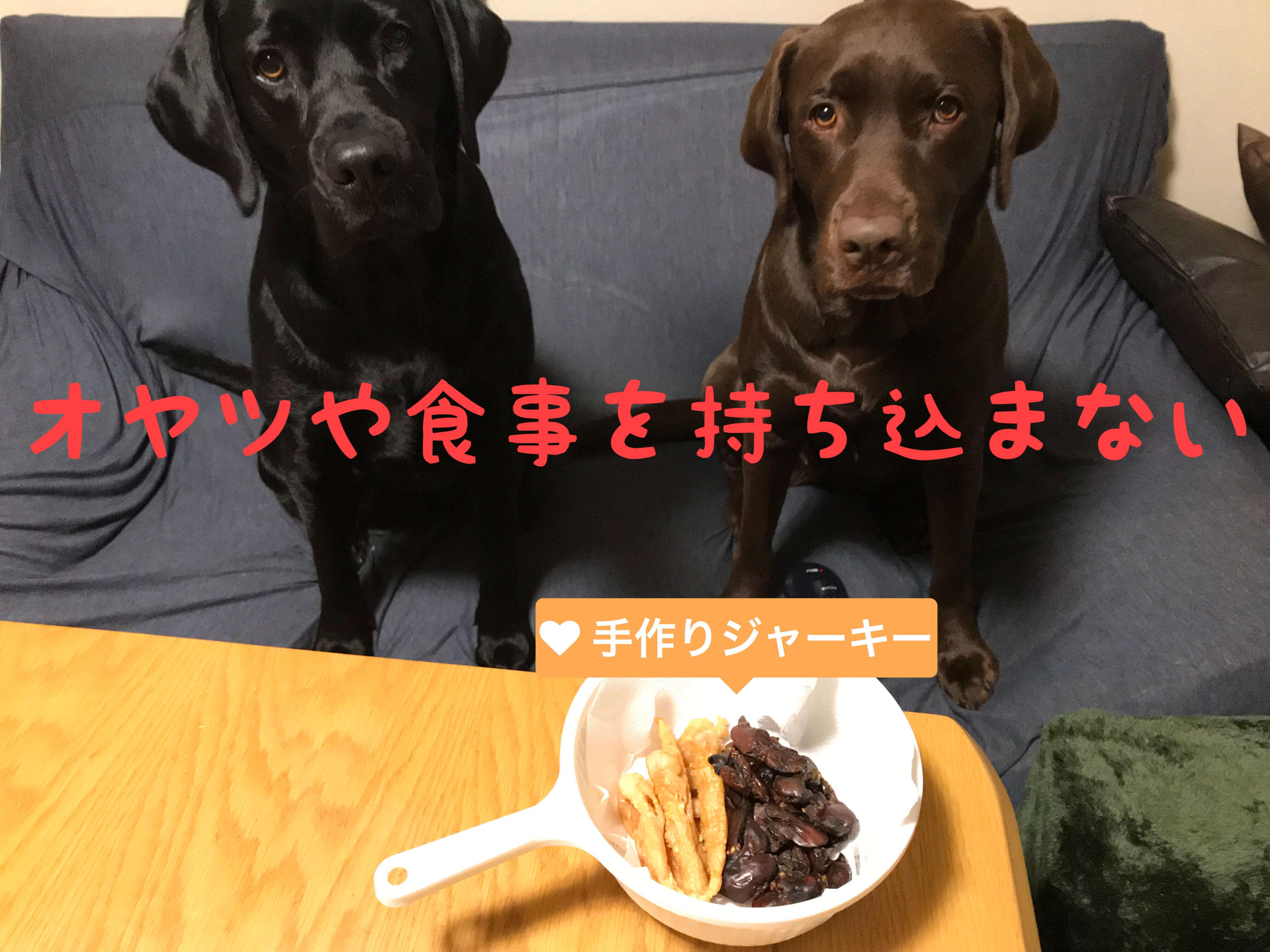 オヤツや食事を持ち込まない 手作りジャーキー 黒のラブラドールレトリバーとチョコレートのラブラドールレトリバー