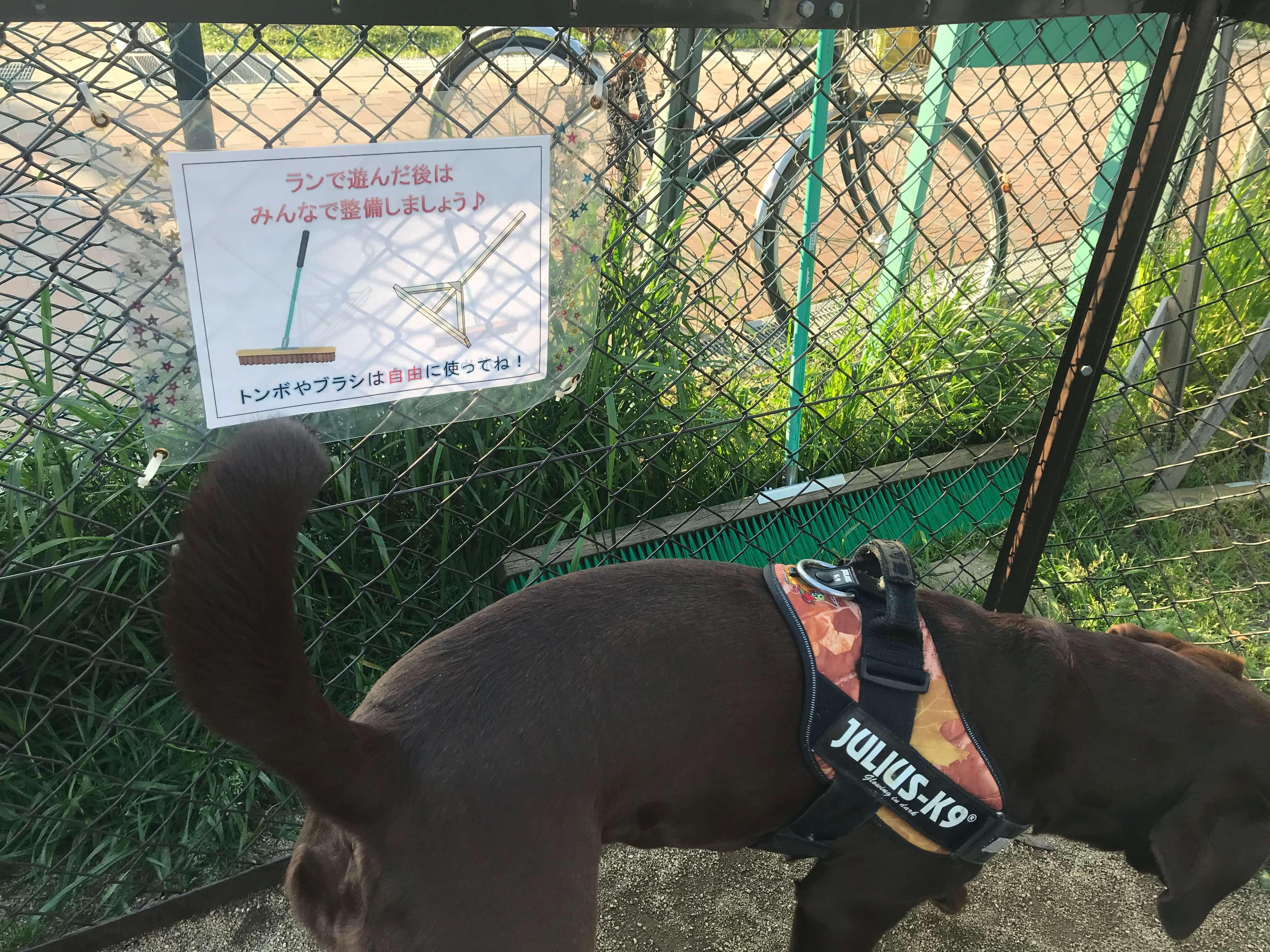 住之江公園ドッグランのマナーPOP ラブラドールレトリバー