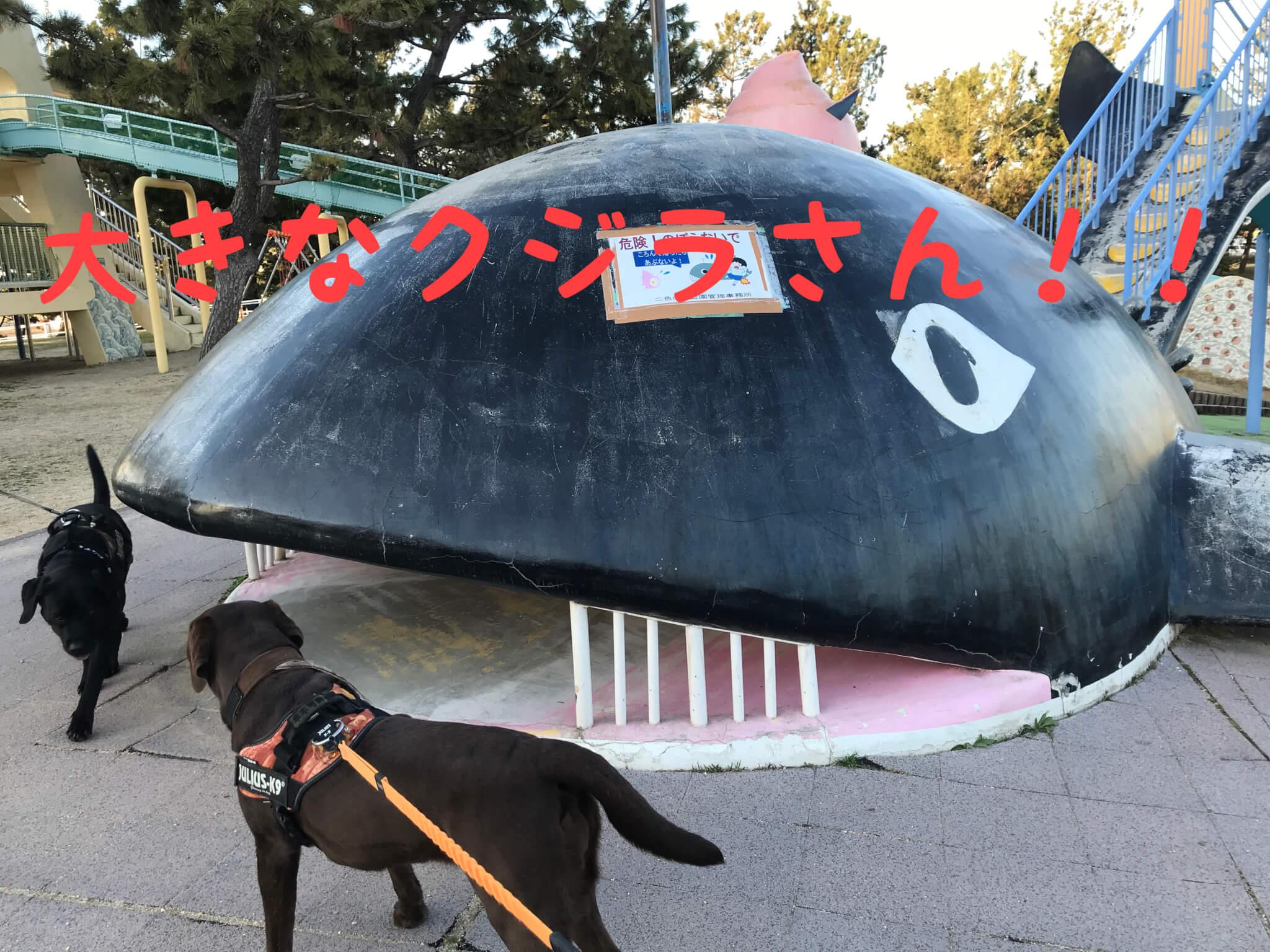 二色の浜公園中央遊技場 ラブラドールレトリバー 大きなクジラさん
