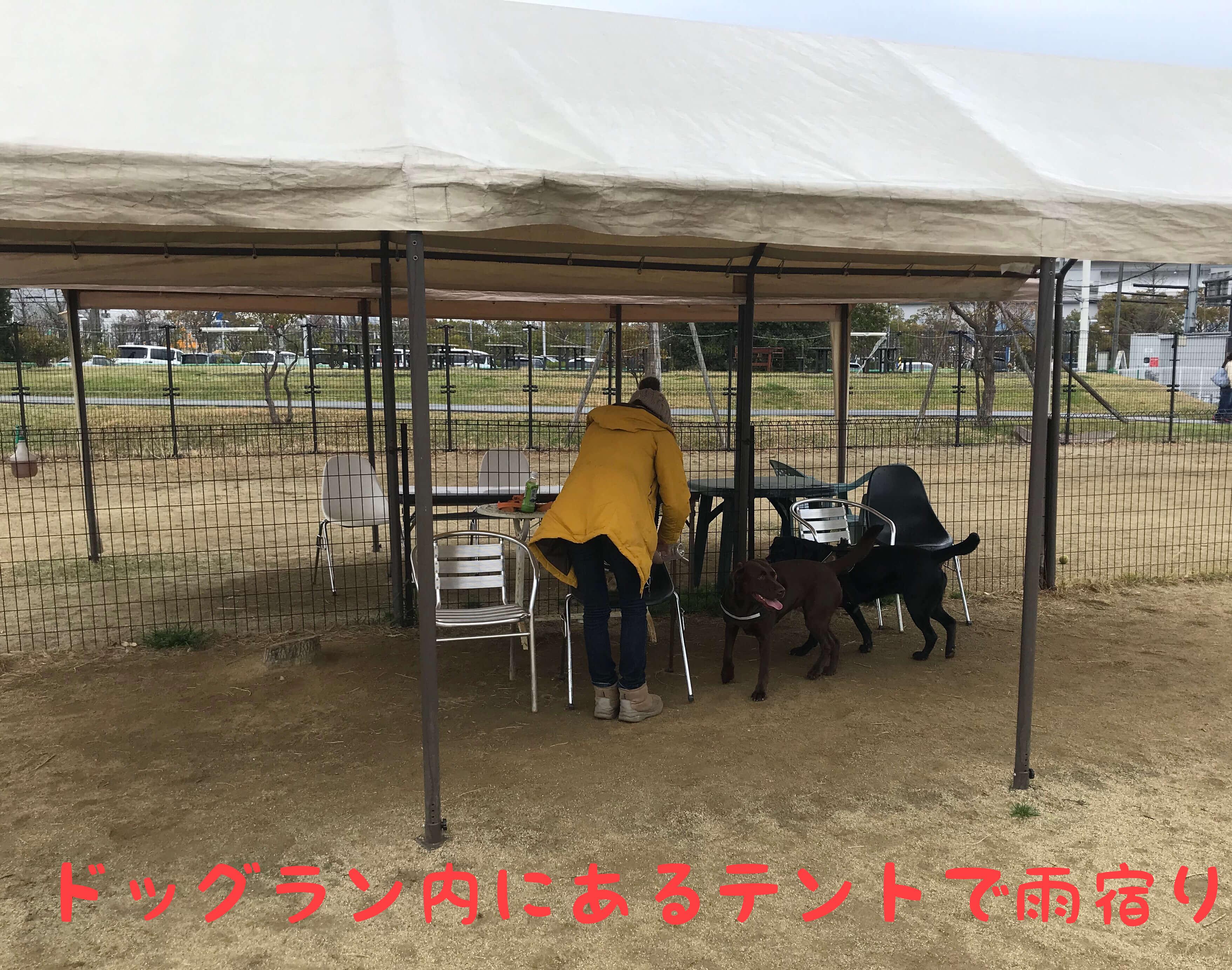 ドッグウォーキング ドッグラン ドッグラン内にあるテントで雨宿り ラブラドールレトリバー