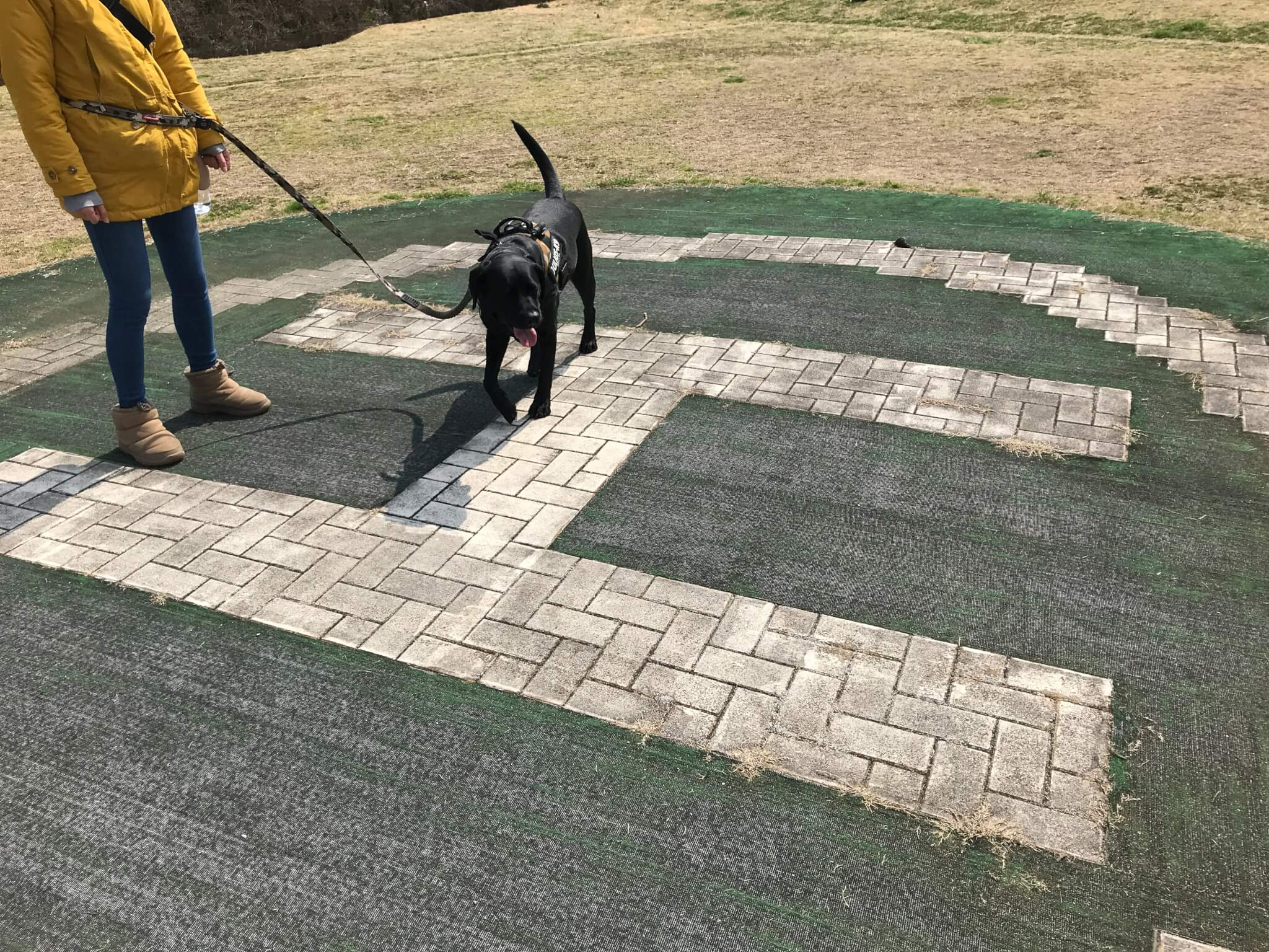 岸和田サービスエリア ヘリポート ラブラドールレトリバー