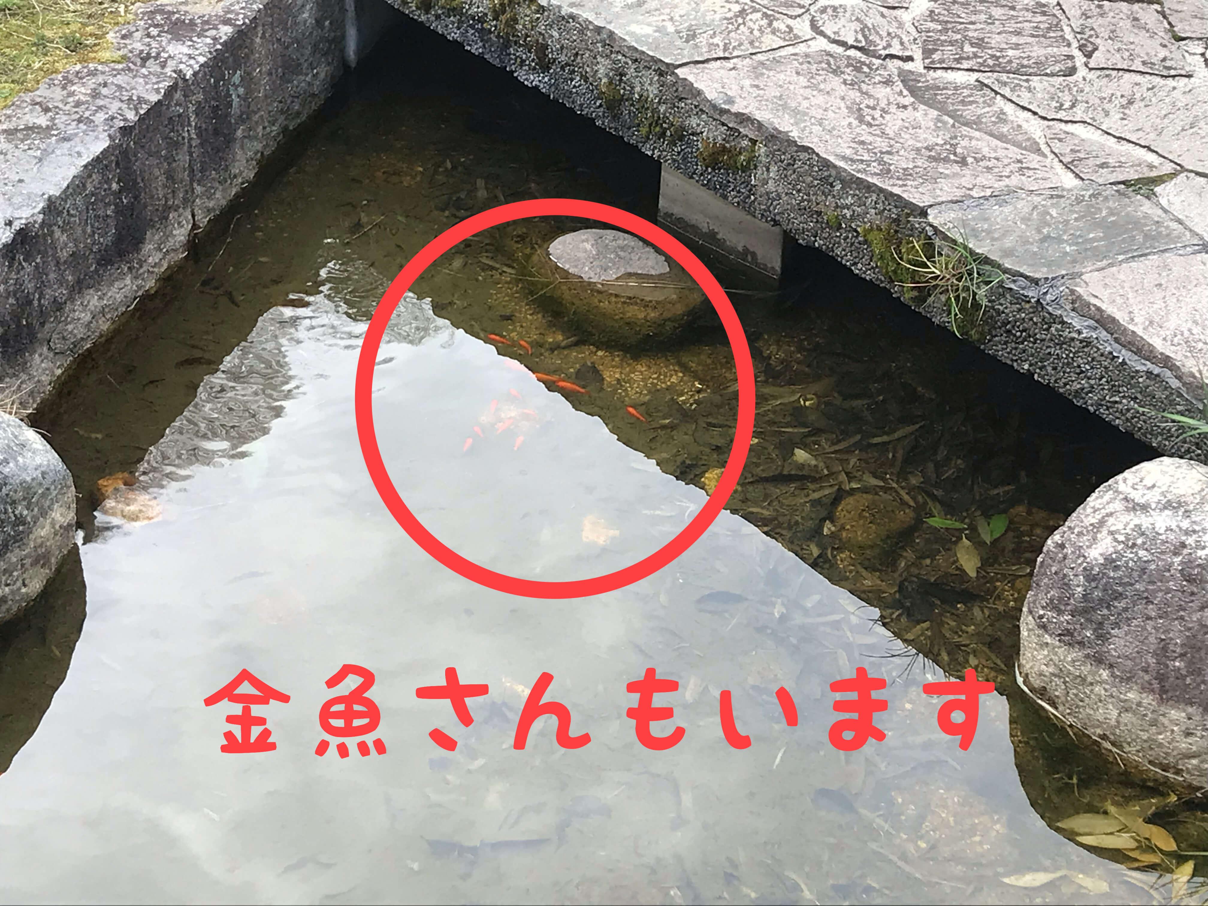岸和田SA 金魚さんもいます