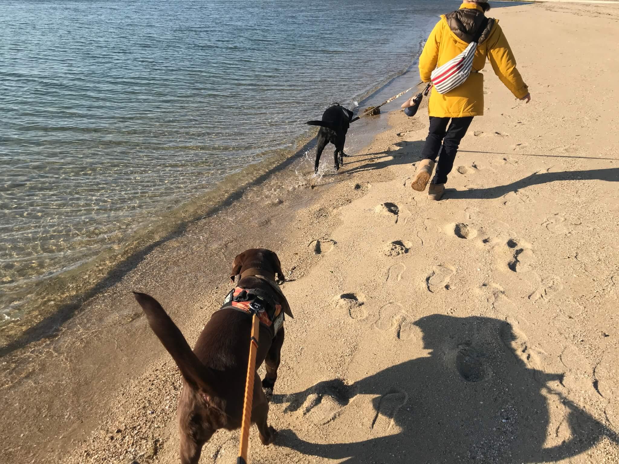 二色の浜 ラブラドールレトリバー