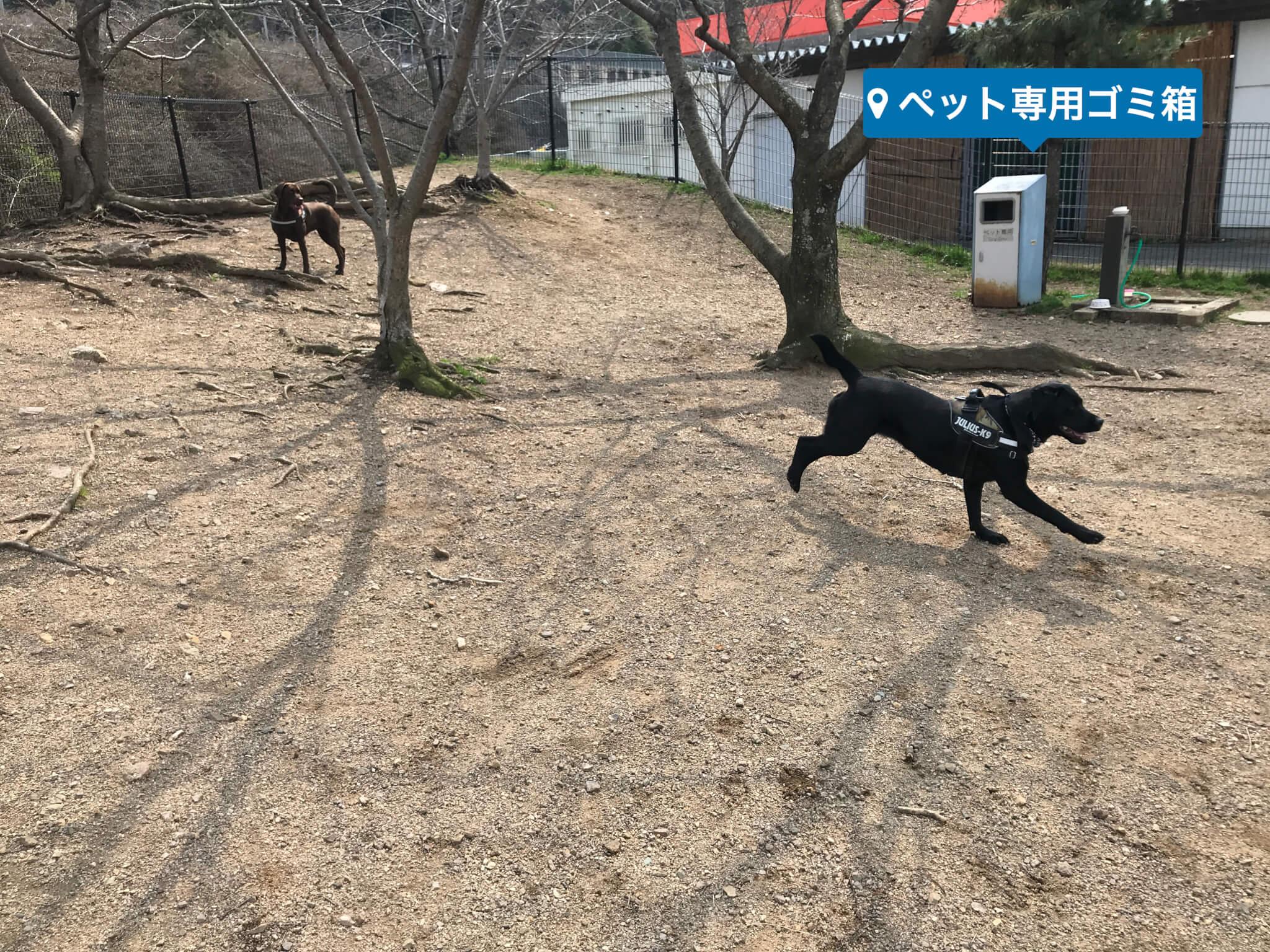 岸和田サービスエリア ドッグラン ラブラドールレトリバー ペット専用ゴミ箱