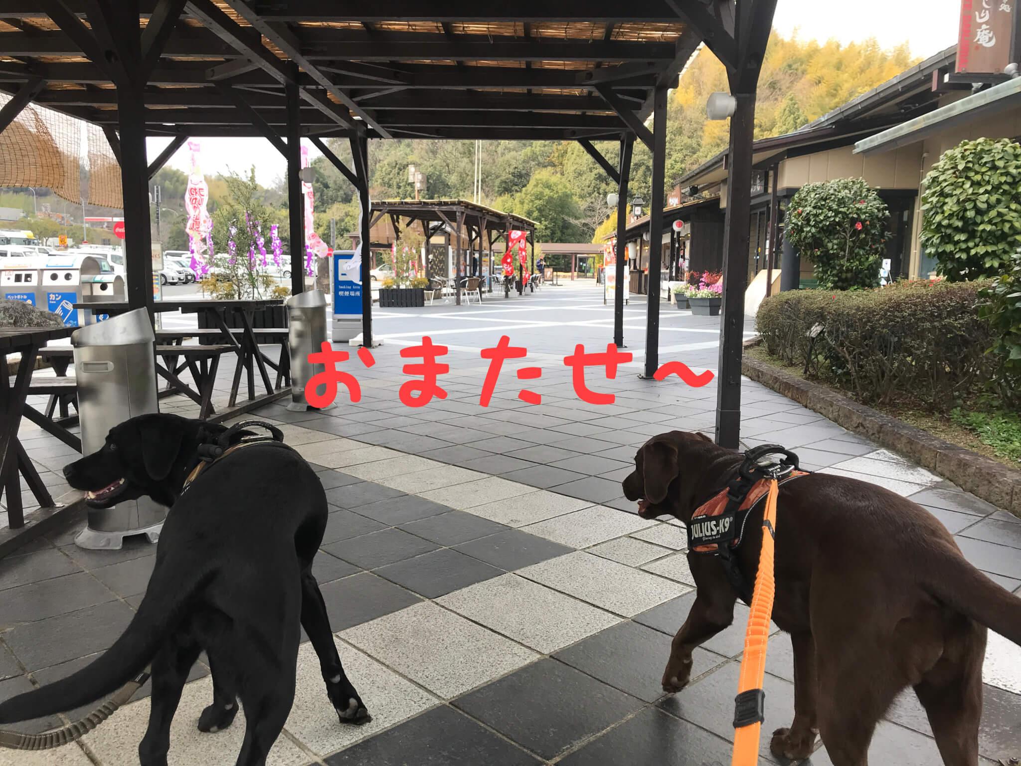 岸和田サービスエリア 喫煙所 ラブラドールレトリバー  おまたせ~