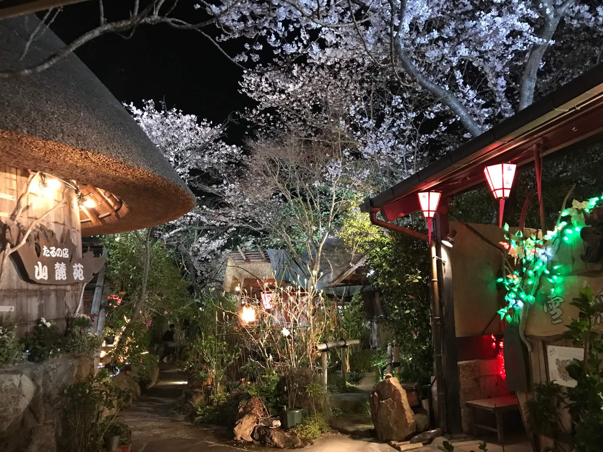 山麓苑 夜桜