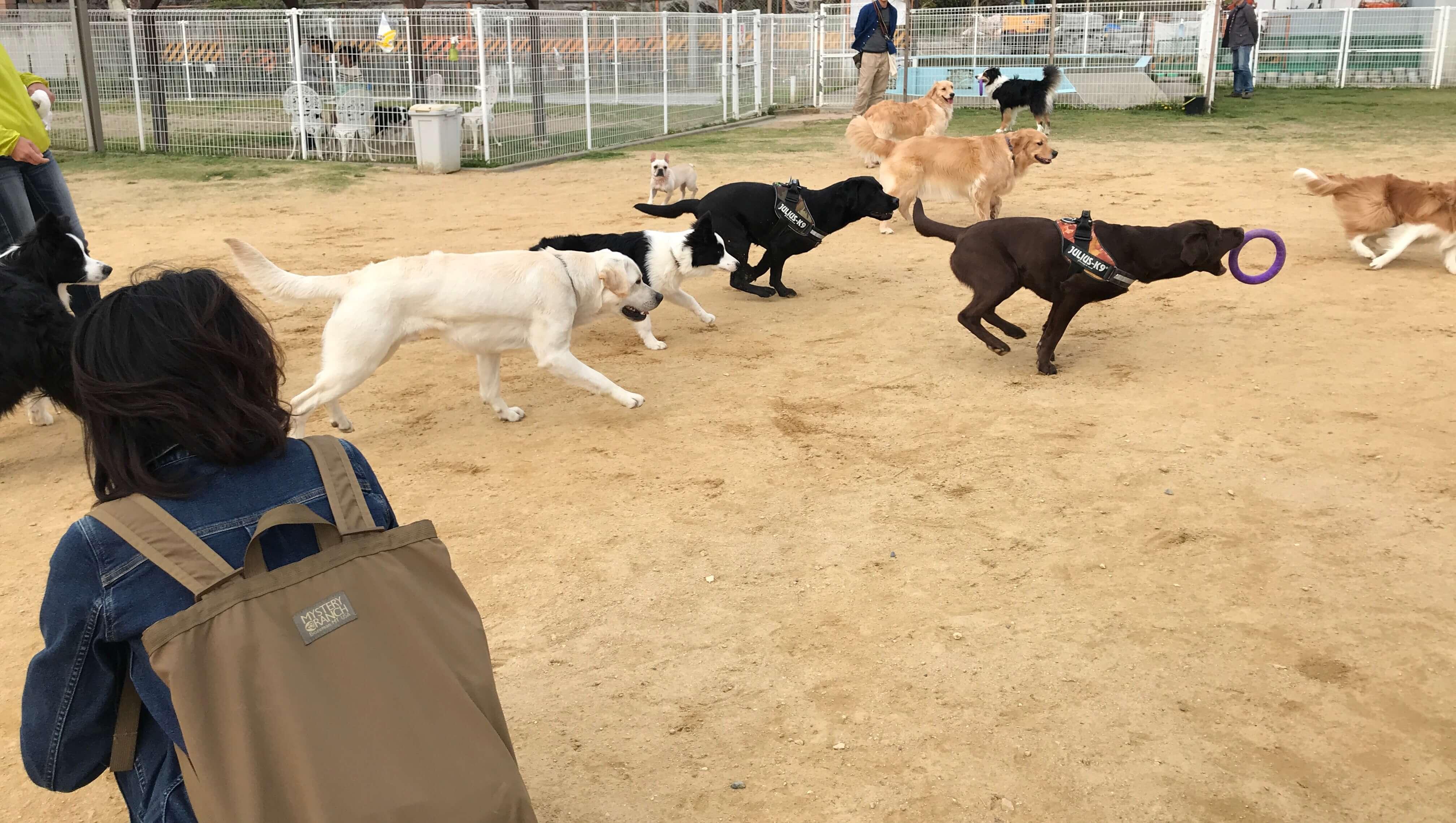 WildGarden ドッグラン 沢山の犬