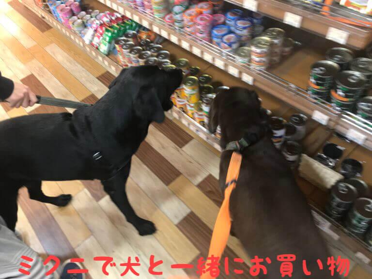 ミクニで犬と一緒にお買い物 ラブラドールレトリバー