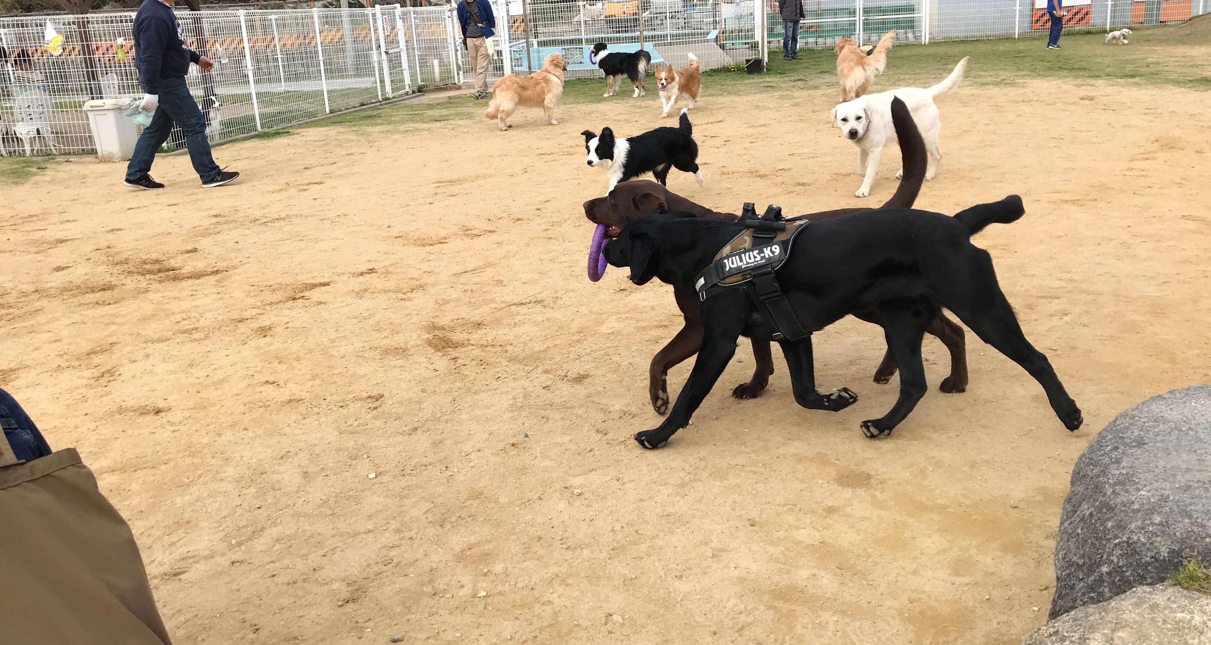 ワイルドガーデンぷらすわん ドッグラン プラーで遊ぶ沢山の犬達