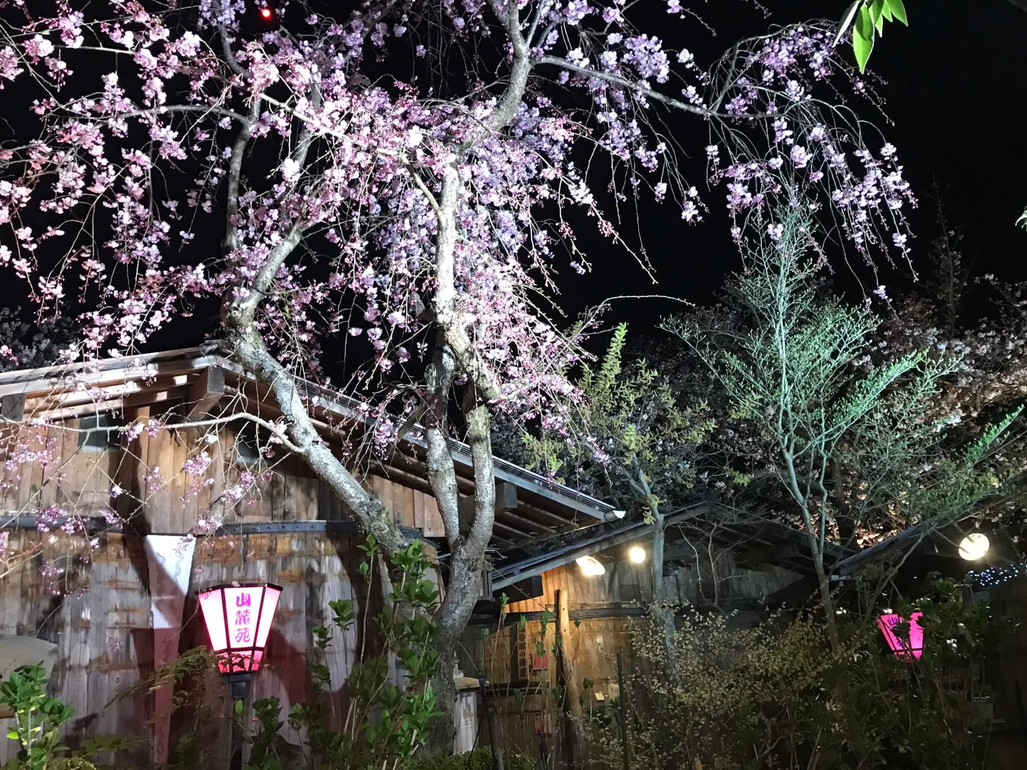 山麓苑 しだれ桜