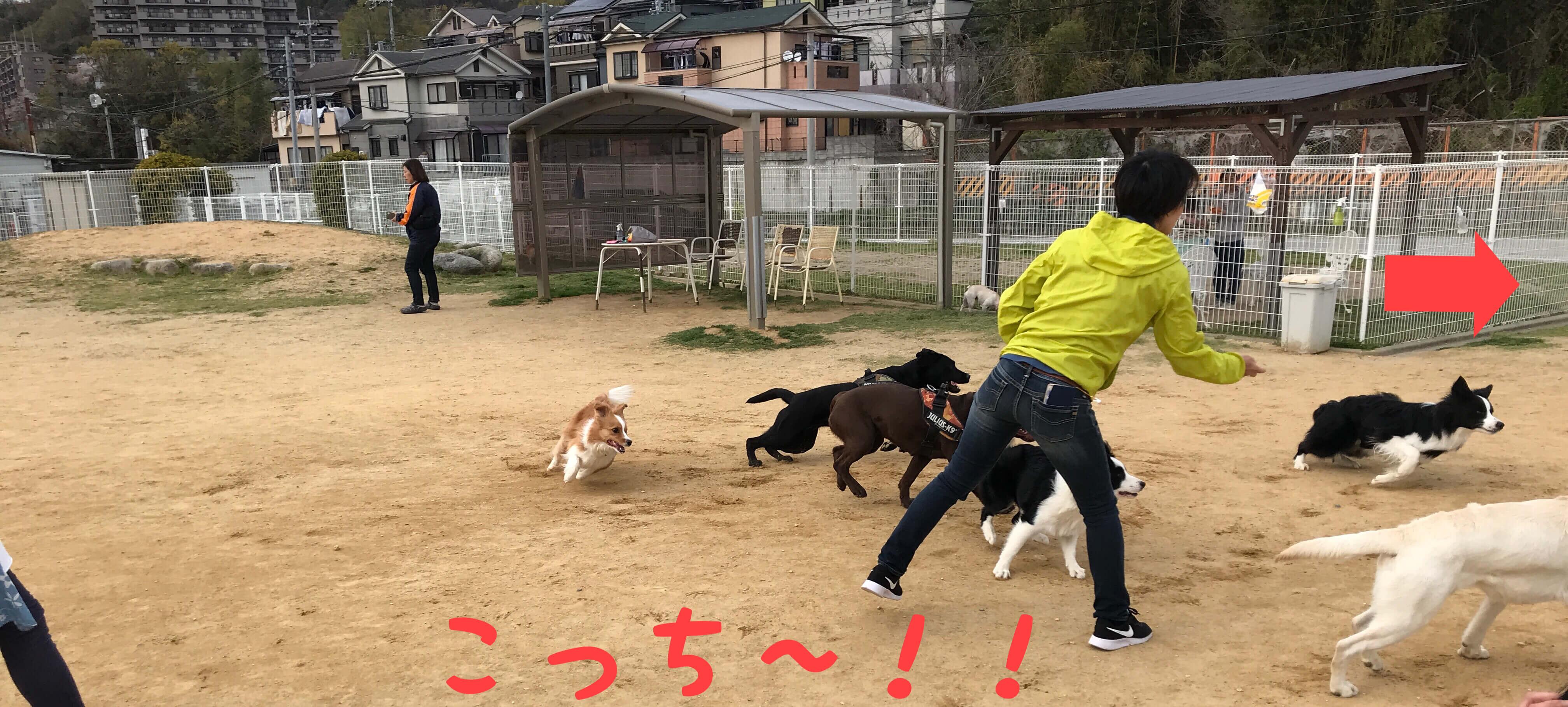 ワイルドガーデンぷらすわん ドッグラン こっち~!! プラーで遊ぶ沢山の犬