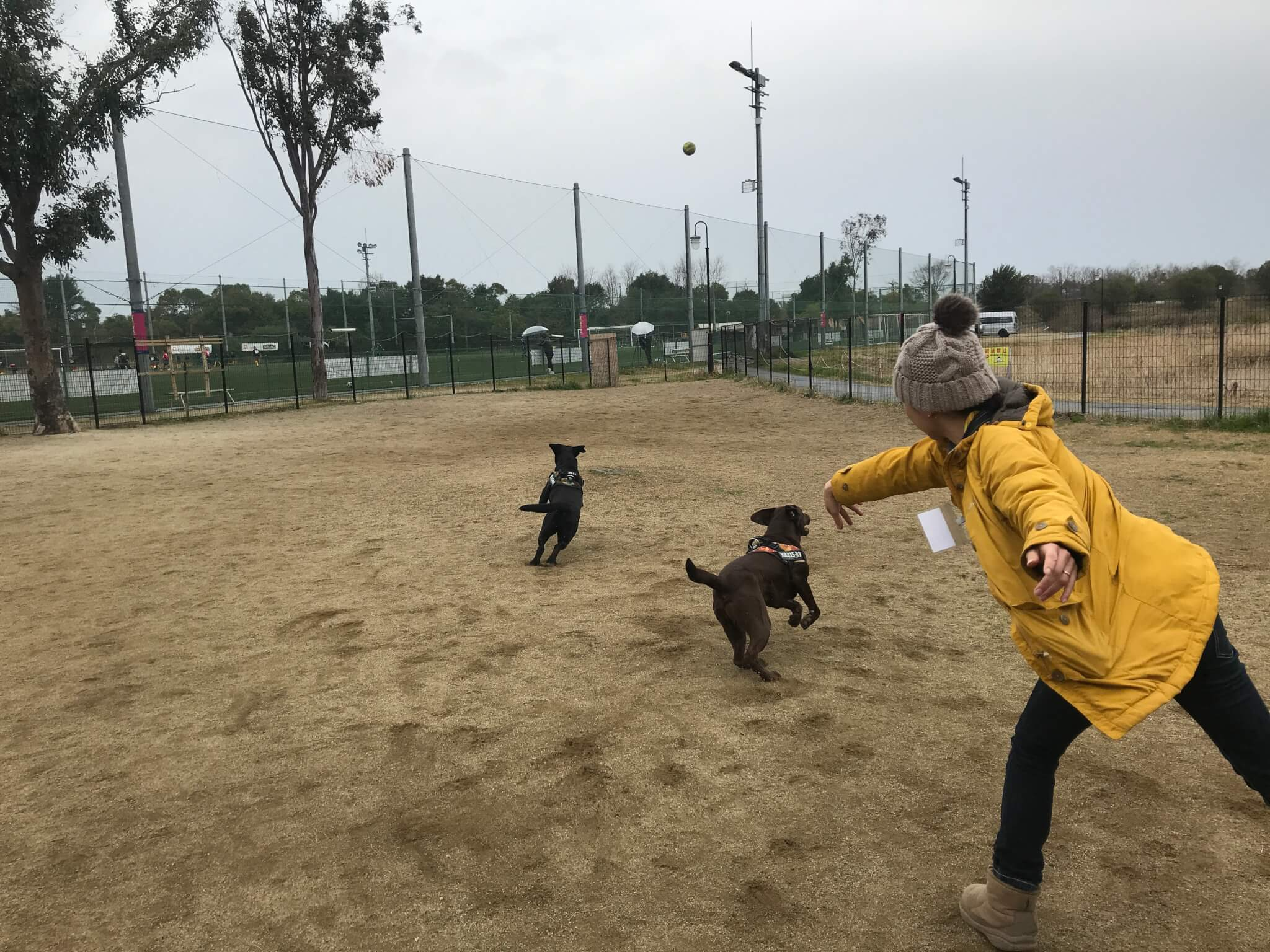 Dog Walking ドッグラン ラブラドールレトリバー