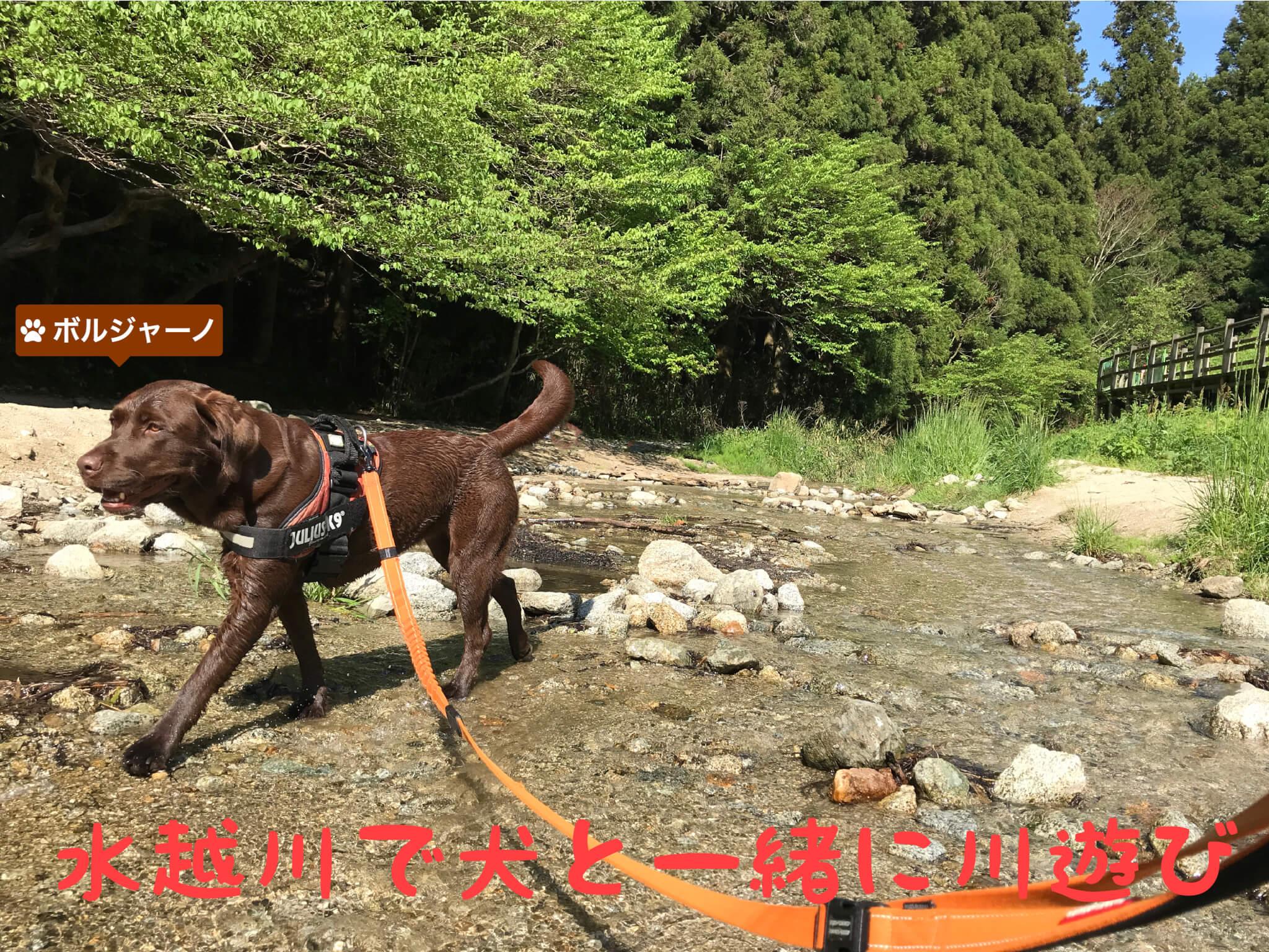 水越川で犬と一緒に川遊び ボルジャーノ