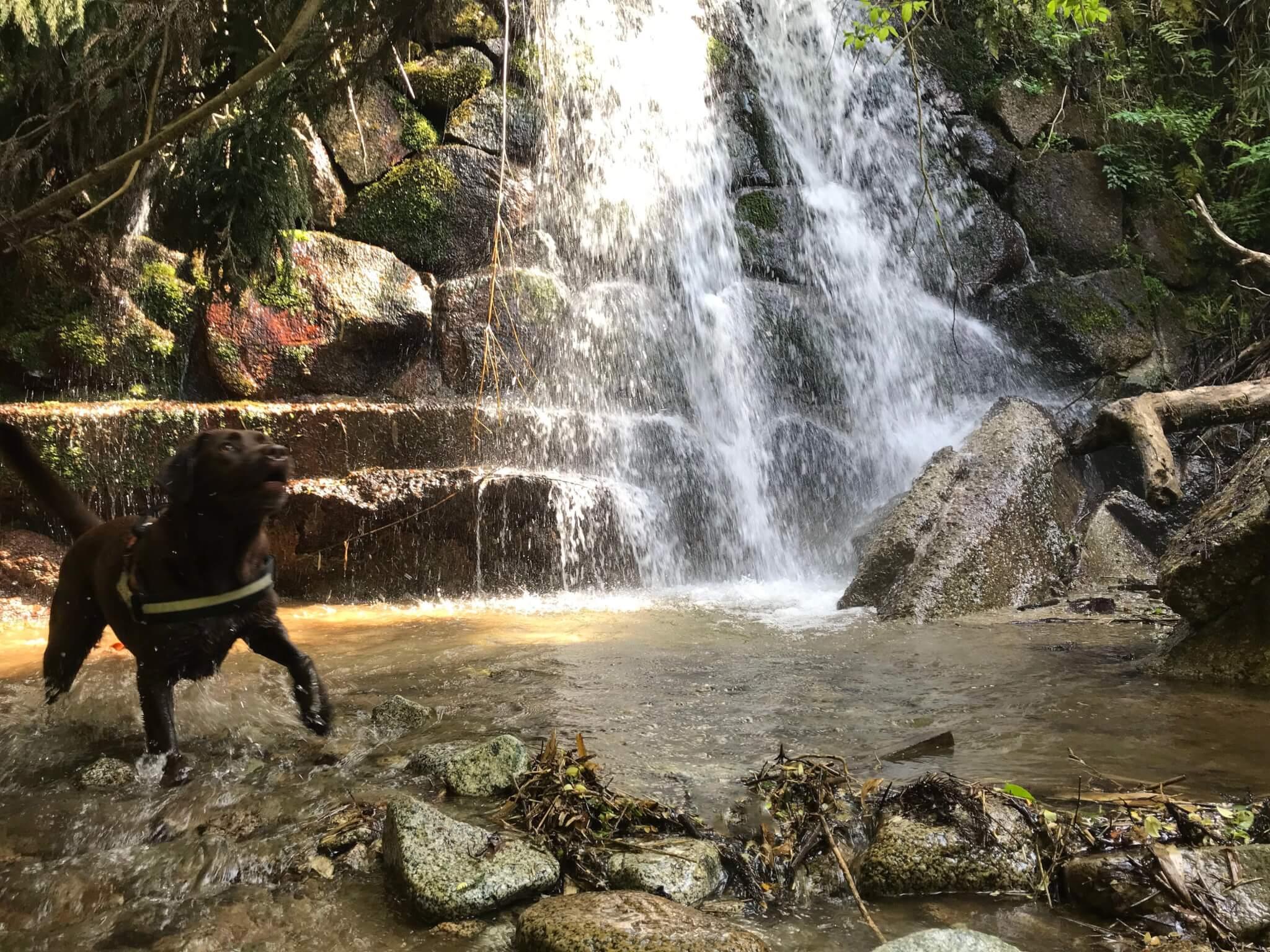 水越川 犬 滝