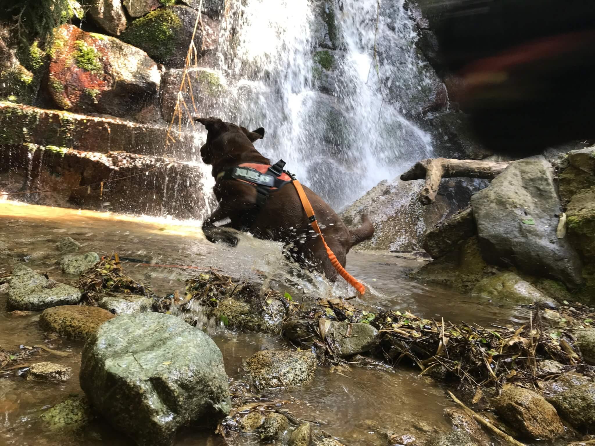 水越川 犬 滝で遊ぶ犬