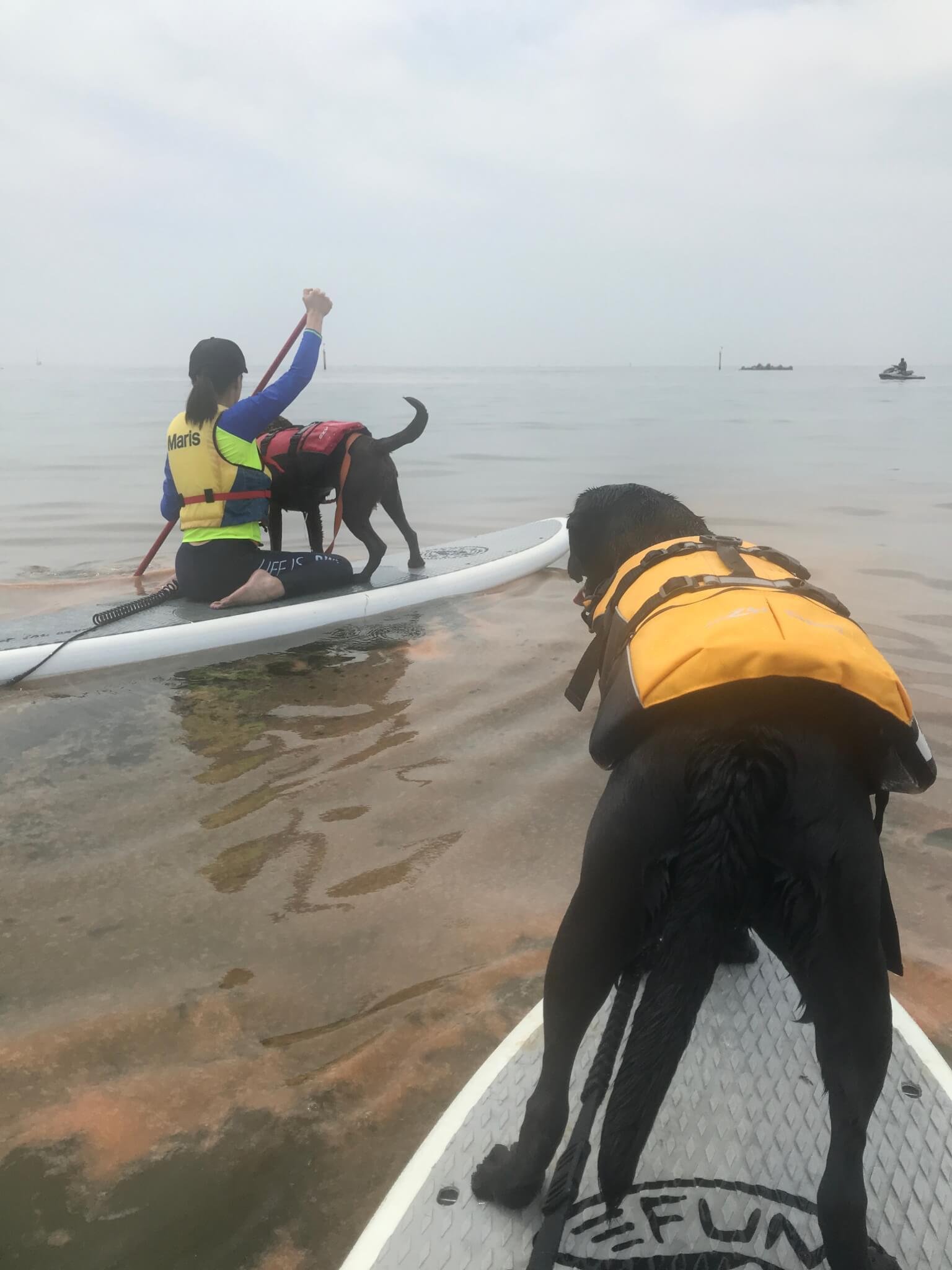 二色の浜 犬 SUP