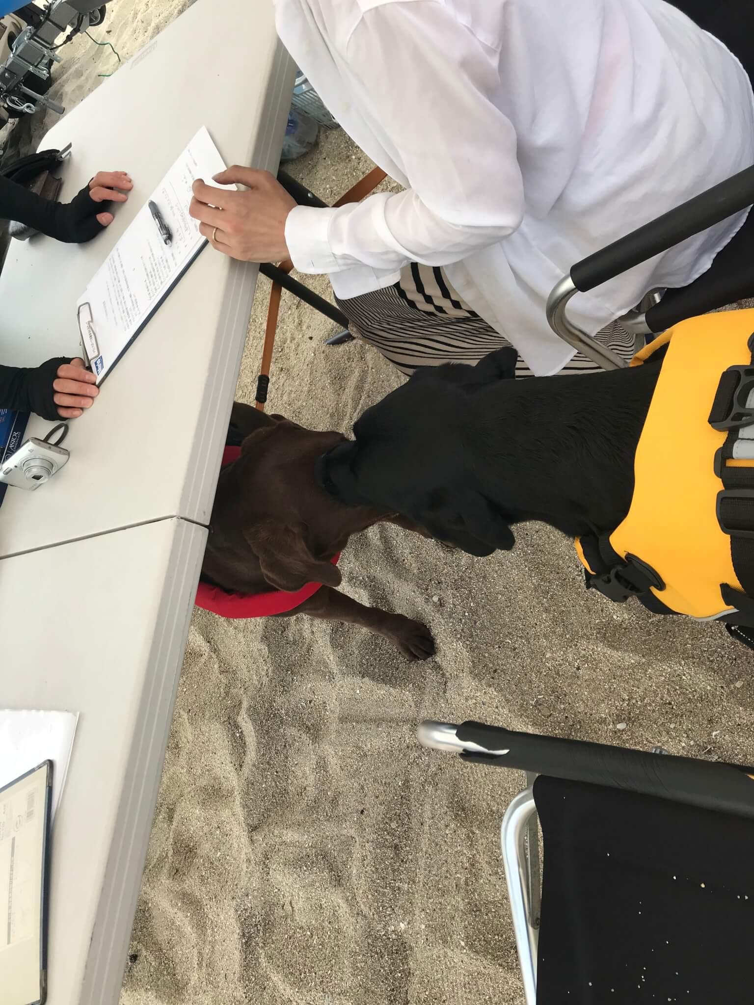 二色の浜 SUP 受付 手続き 机の下に犬