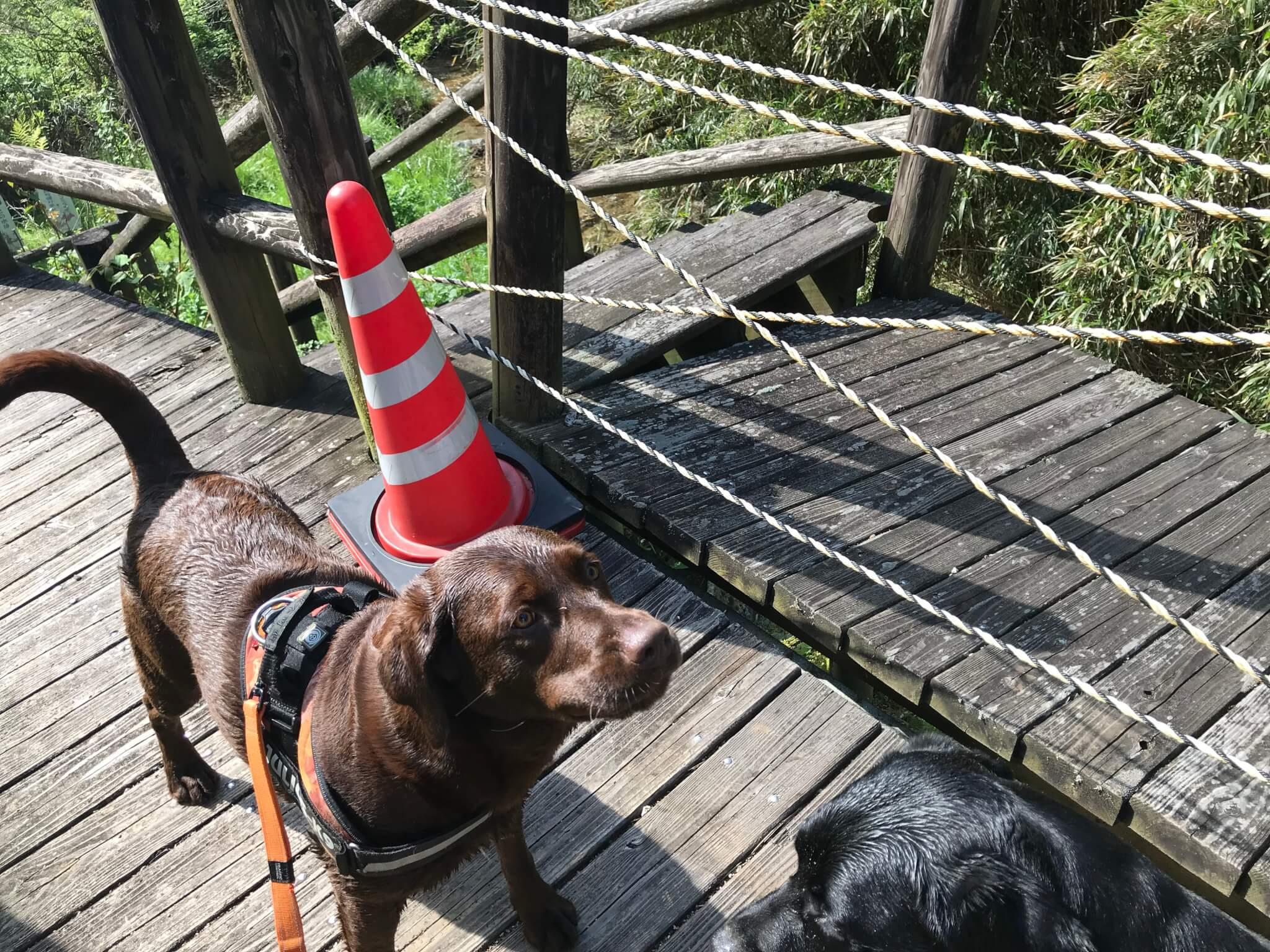 水越川 犬 遊歩道 立ち入り禁止