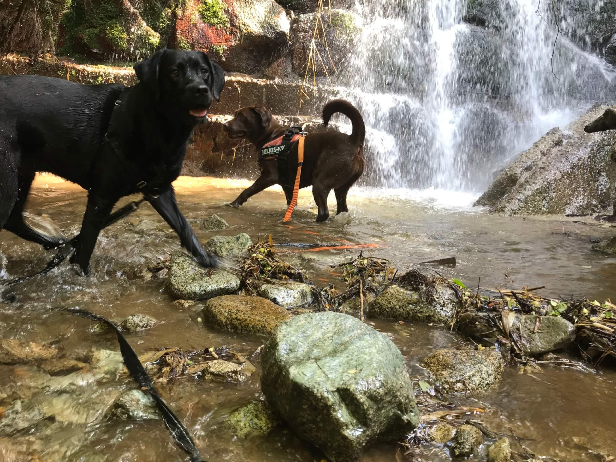 水越川 犬 滝遊び