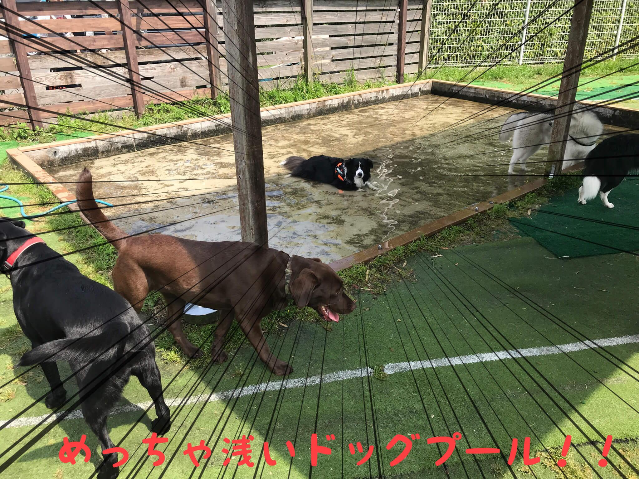 309美原ドッグランのプール めっちゃ浅いドッグプール!!