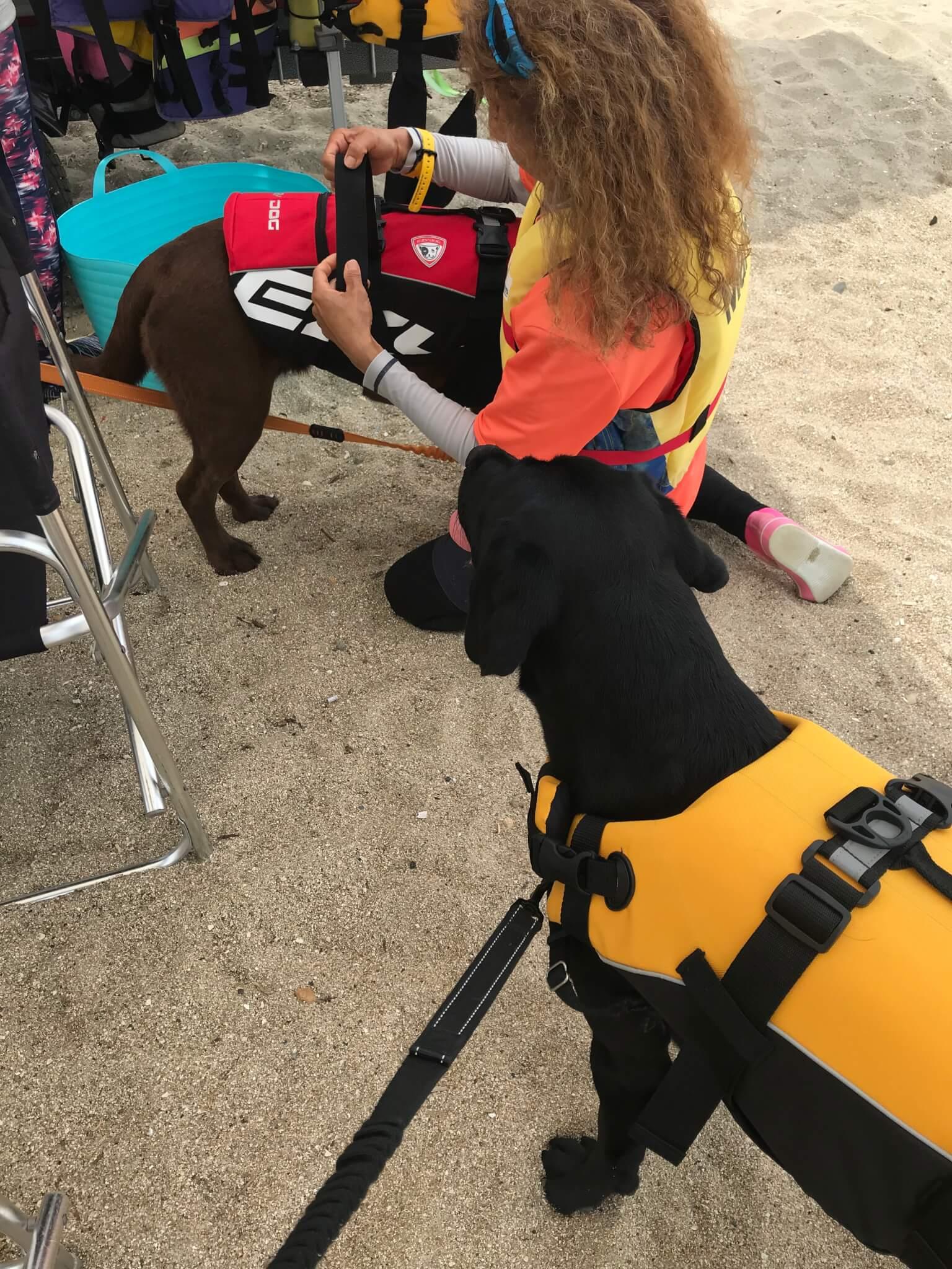 二色の浜 EZYDOGのライフジャケット ラブラドールレトリバー