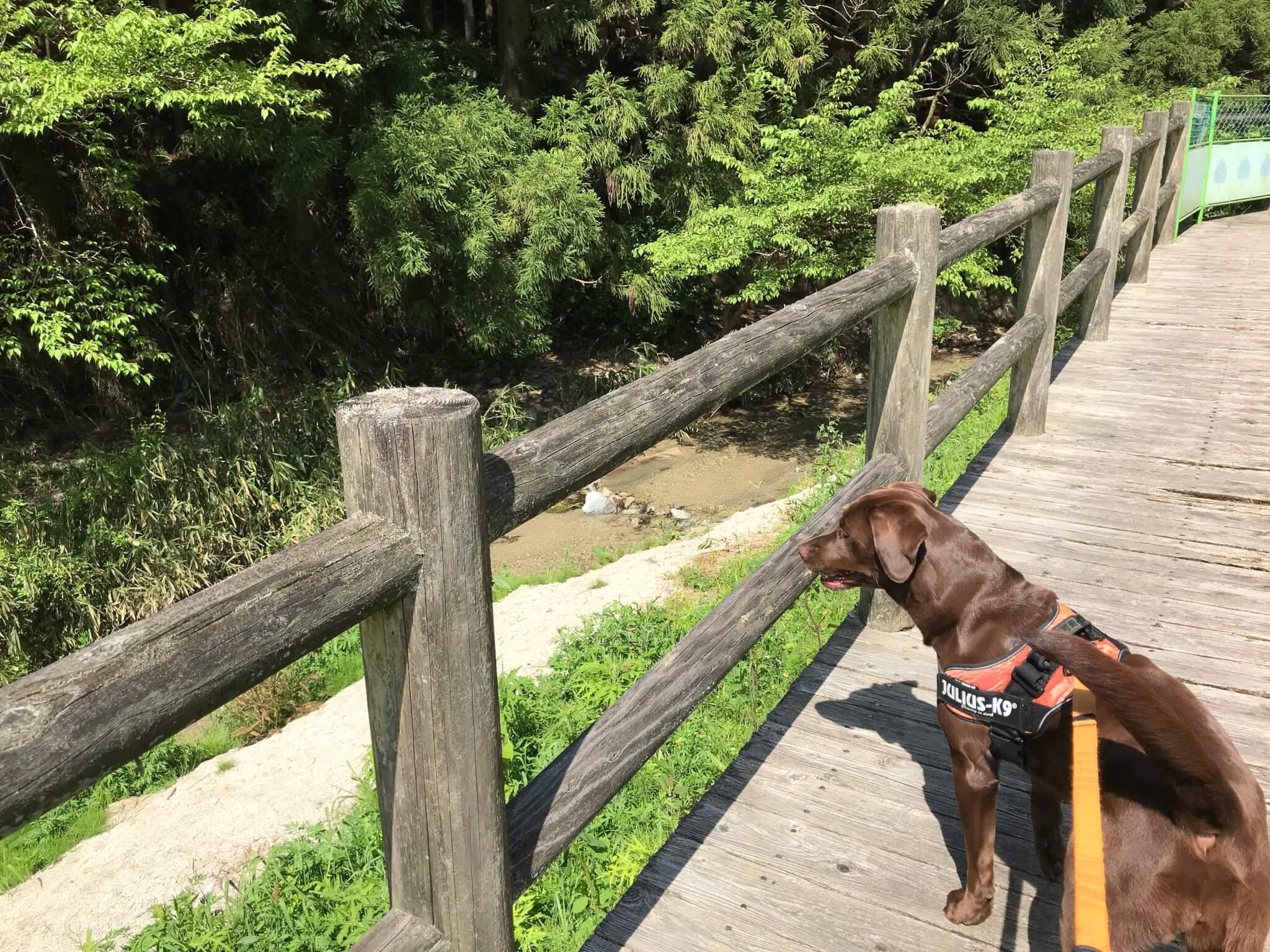 水越川 犬 遊歩道