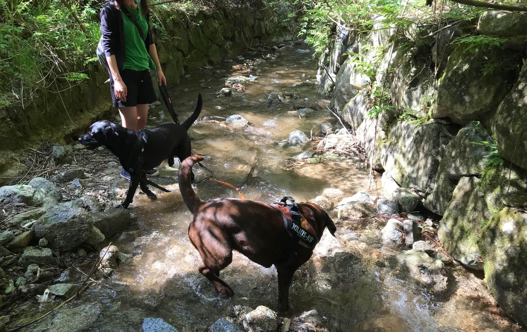 水越川 犬 川遊び