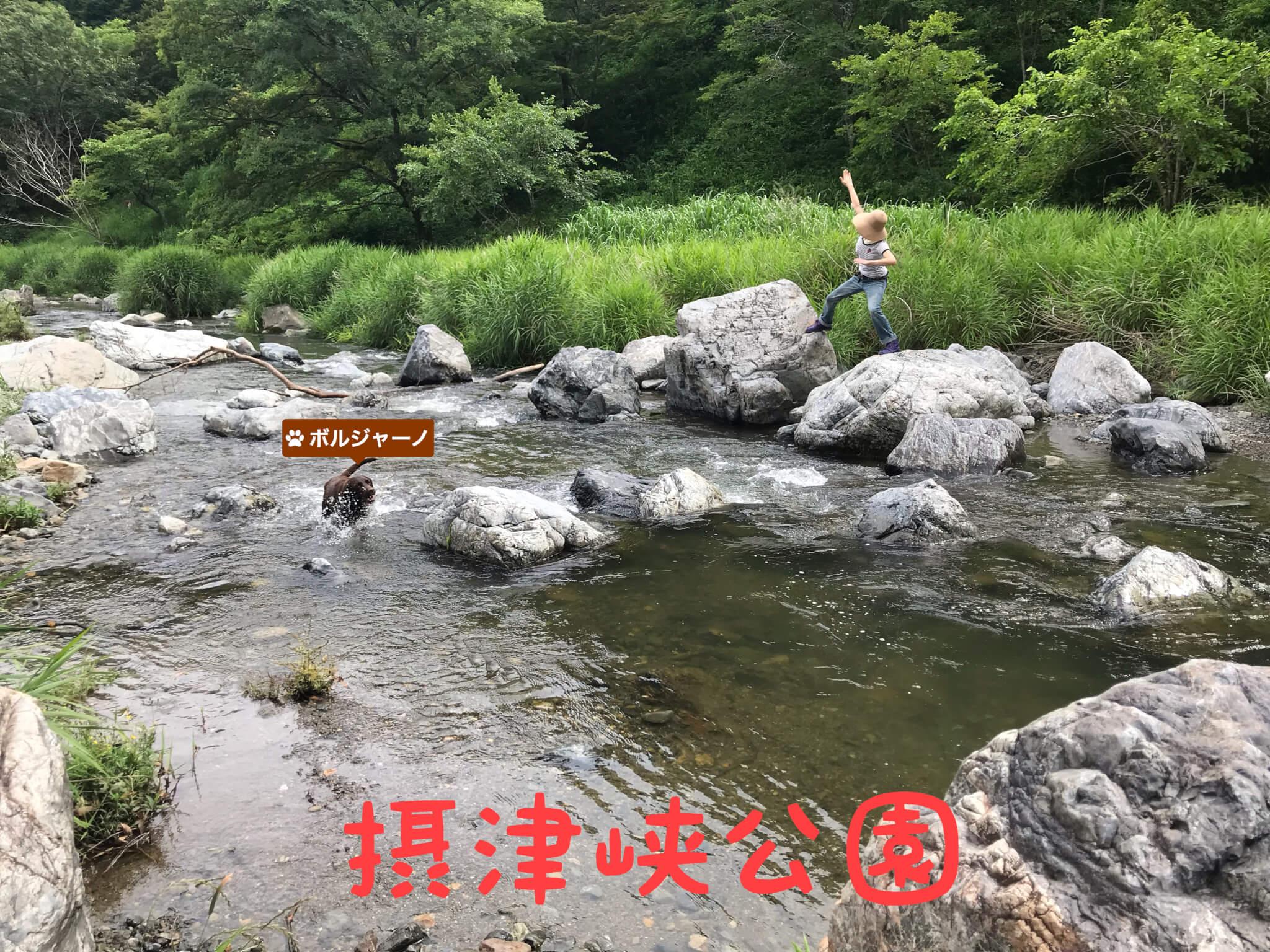 摂津峡公園 ボルジャーノ 川で遊ぶラブラドールレトリバー 芥川 岩に乗る飼い主
