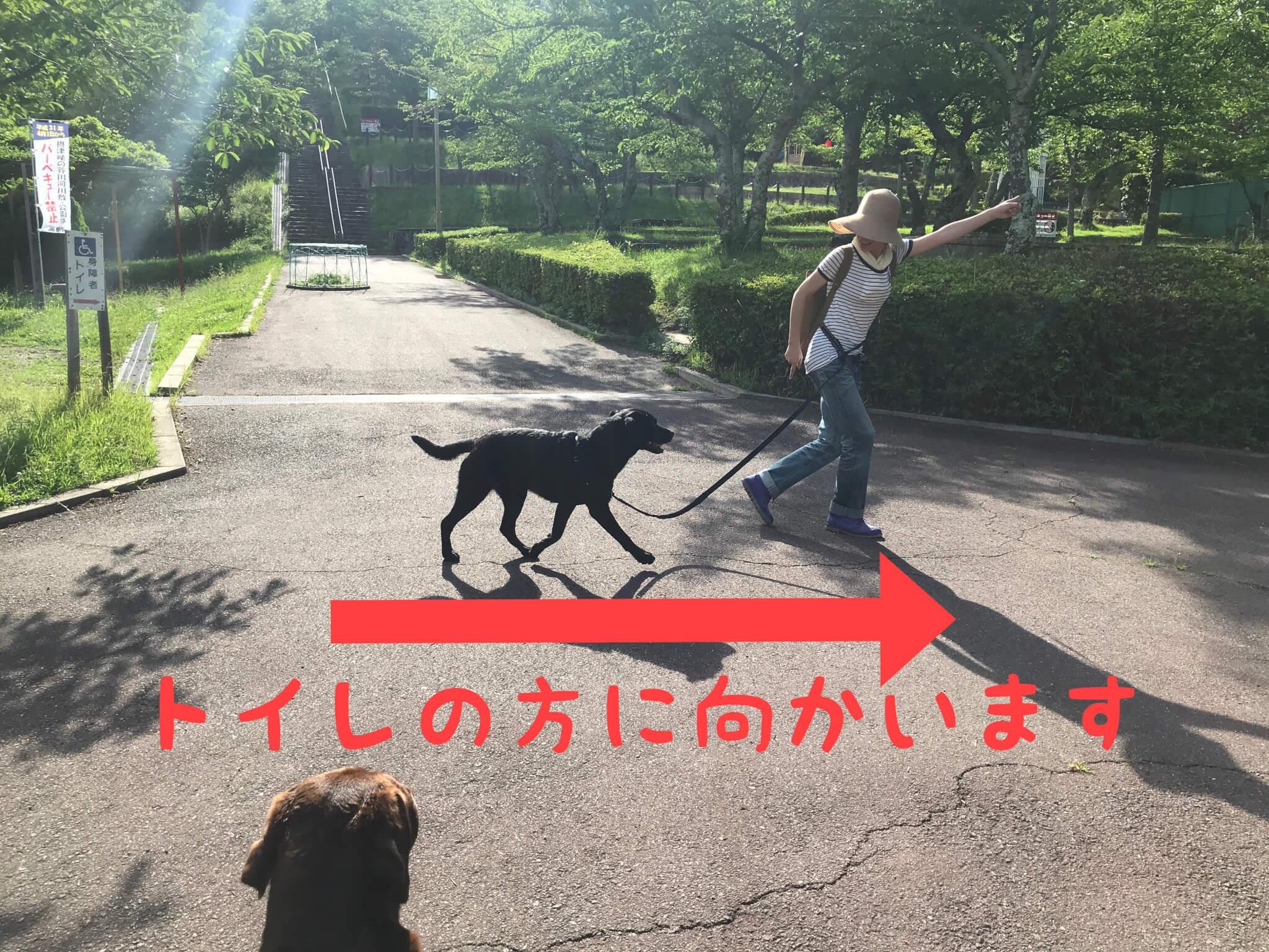 摂津峡公園 桜広場 トイレの方に向かいます ラブラドールレトリバー
