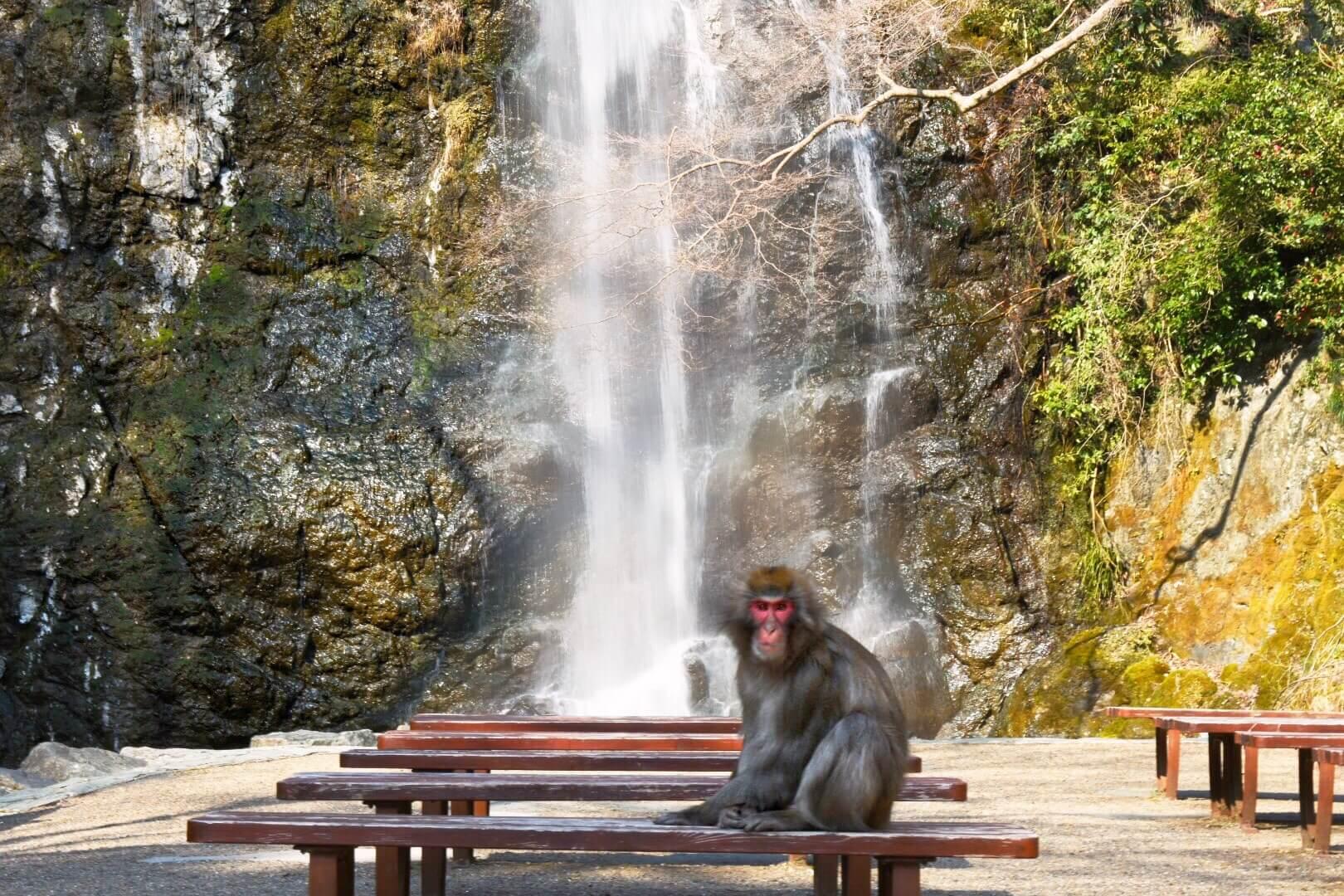 箕面公園 猿 滝
