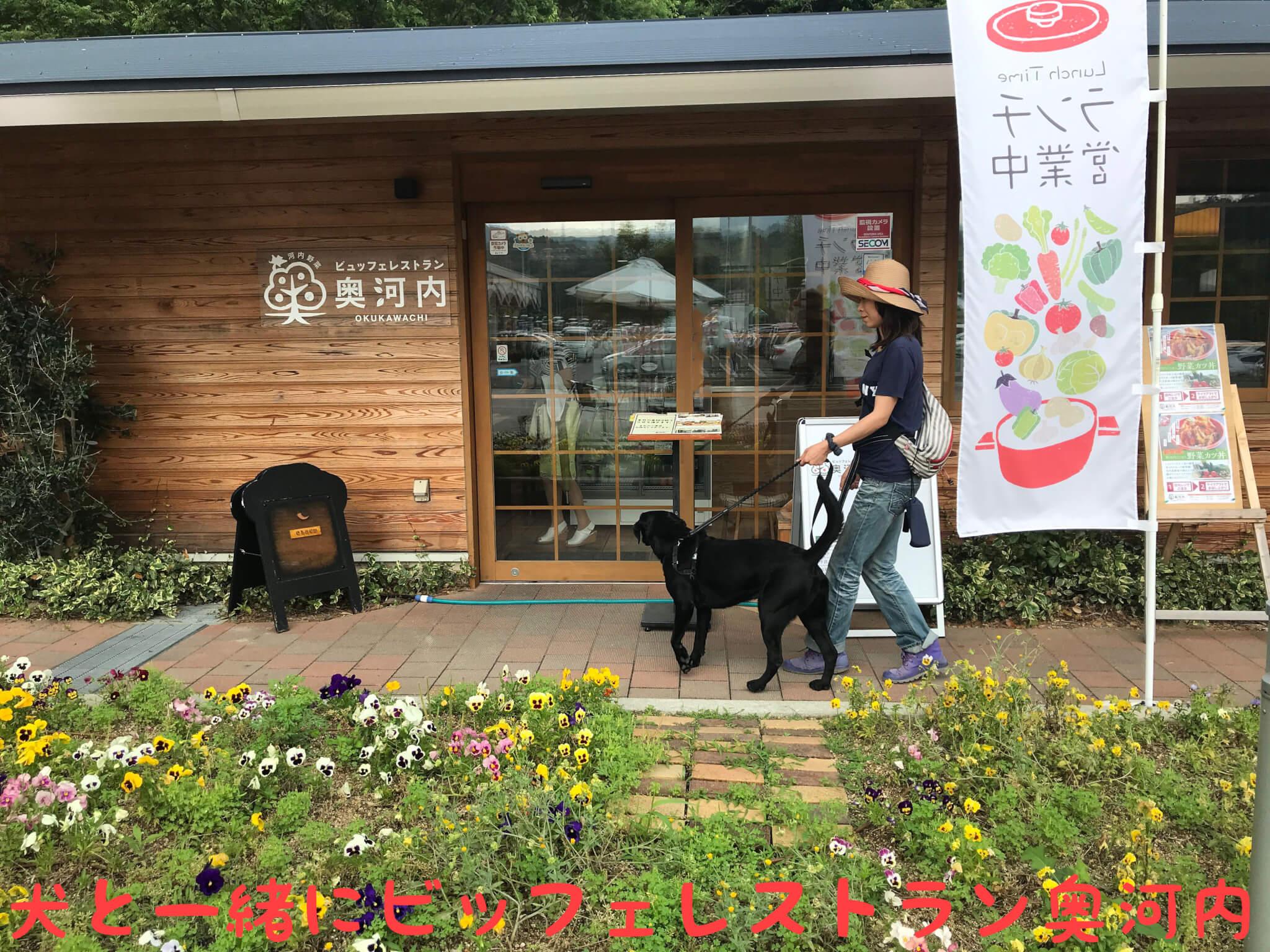 ビッフェレストラン奥河内 犬と一緒にビッフェレストラン奥河内 ラブラドールレトリバー