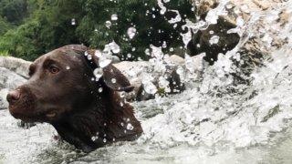 摂津峡公園で犬と川遊び