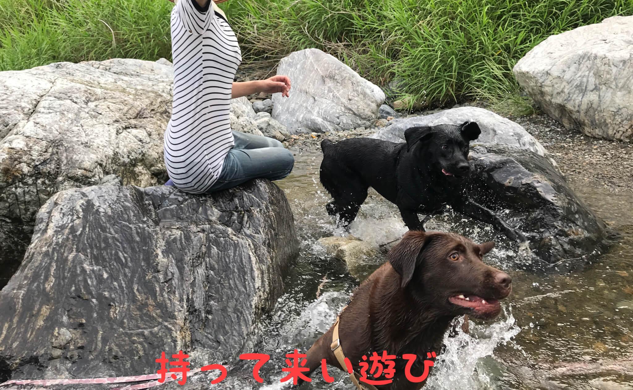 摂津峡公園 犬 川遊び 芥川 ラブラドールレトリバー 持って来い遊び