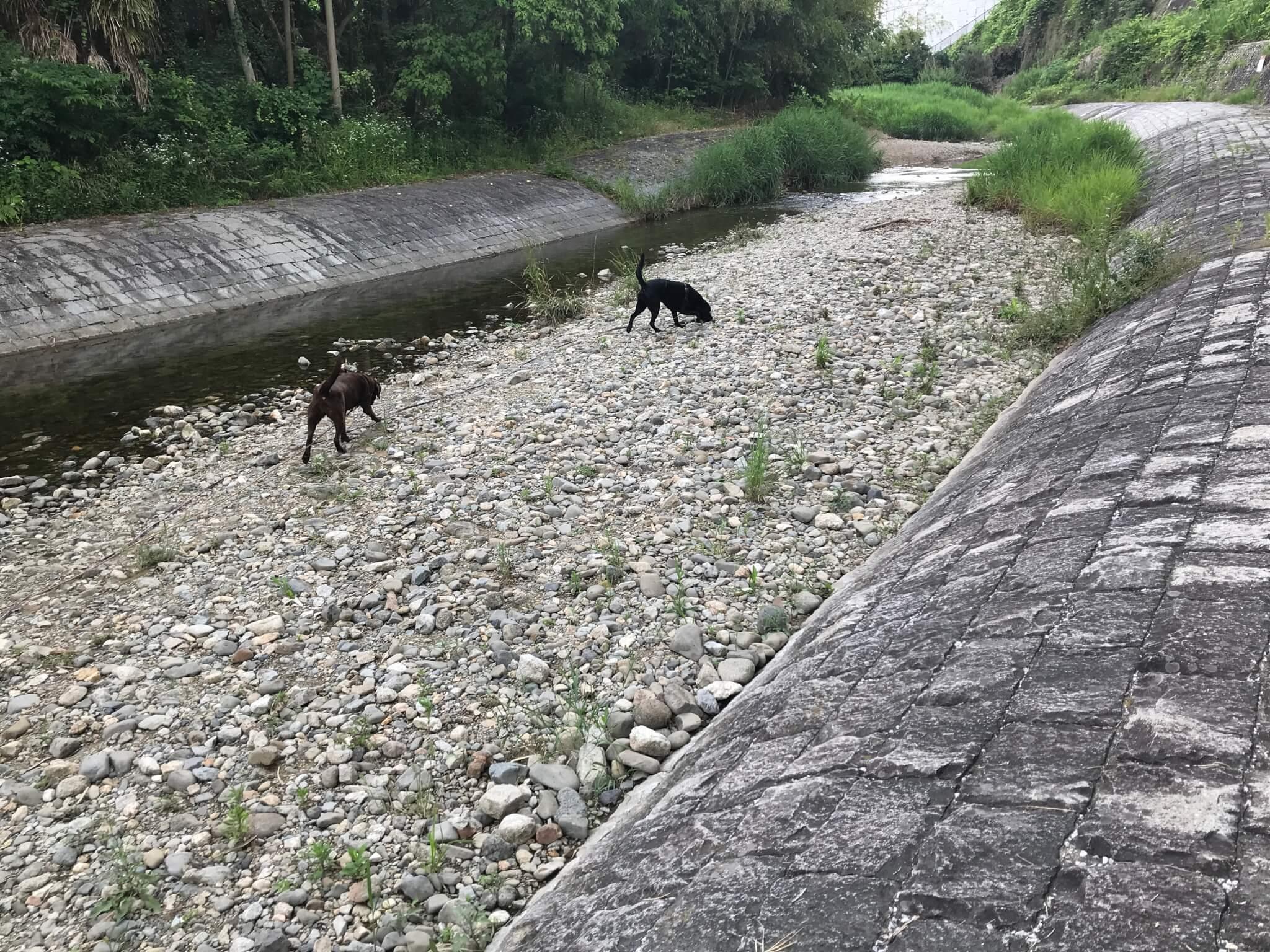 くろまろの郷で犬と一緒に川遊び ラブラドールレトリバー